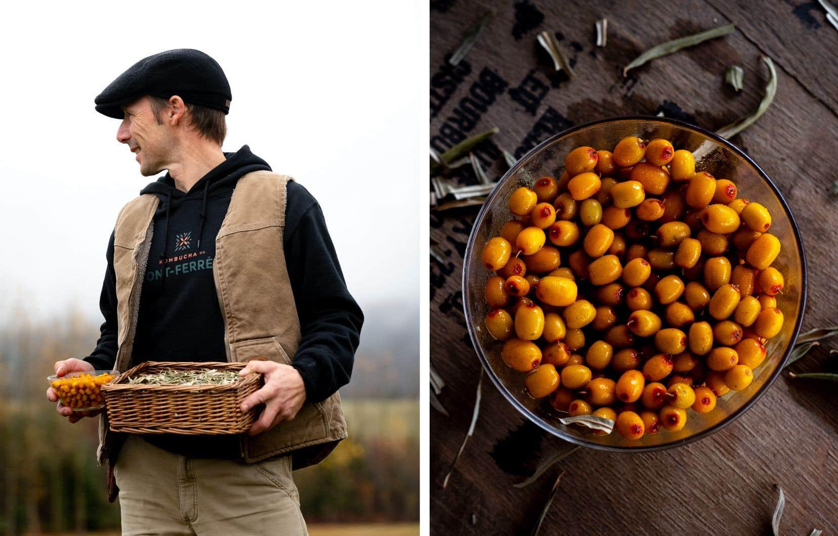 Léandre Saindon a d'abord fait le commerce des baies d'argousiers, avant de sauter à pieds joints, en 2018, dans l'aventure de la production de kombucha.