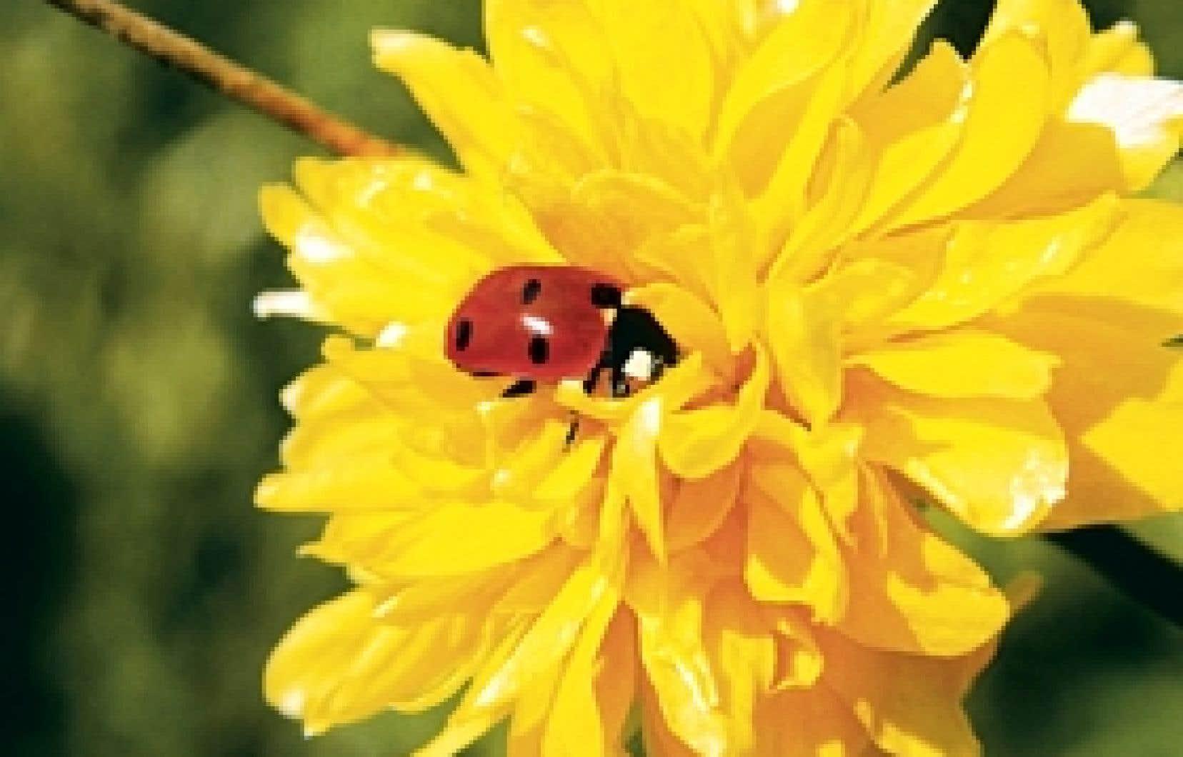 Vingt conseils pour jardiner proprement le devoir for Conseil pour jardiner