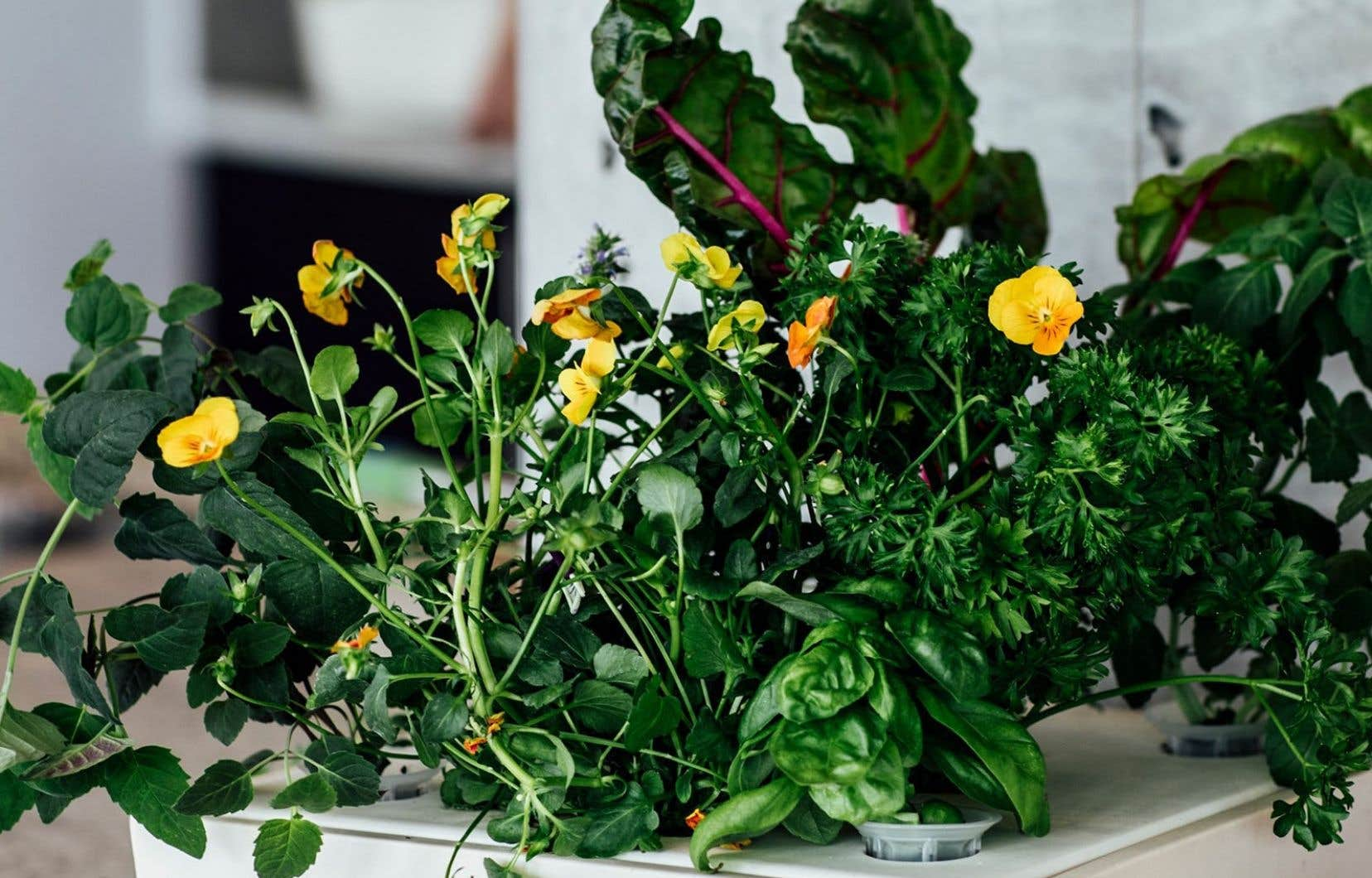 Les modèles de culture en terre ou hors sol sont de plus en plus nombreux. Sur la photo, le jardin HIRTA offert par l'entreprise montréalaise Studio îlot.