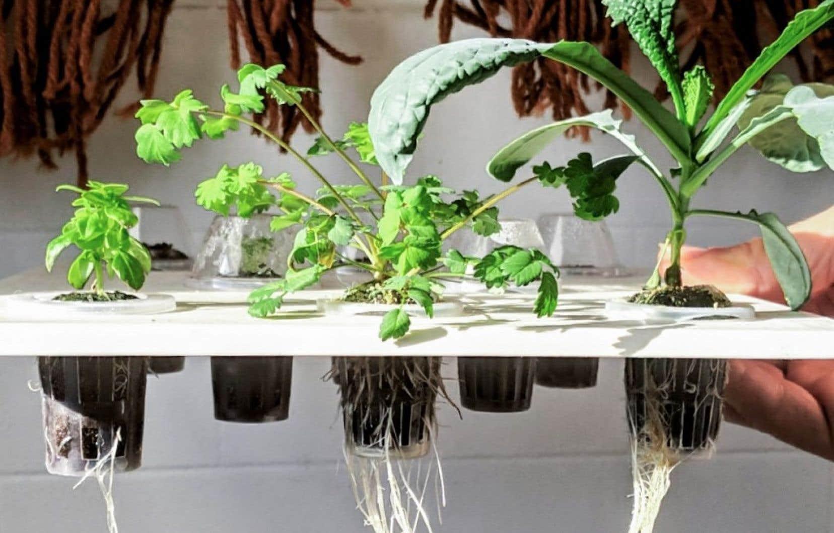 L'approche hydroponique, par laquelle les plantes poussent dans l'eau plutôt que dans la terre, requiert une bonne gestion de l'apport en eau.