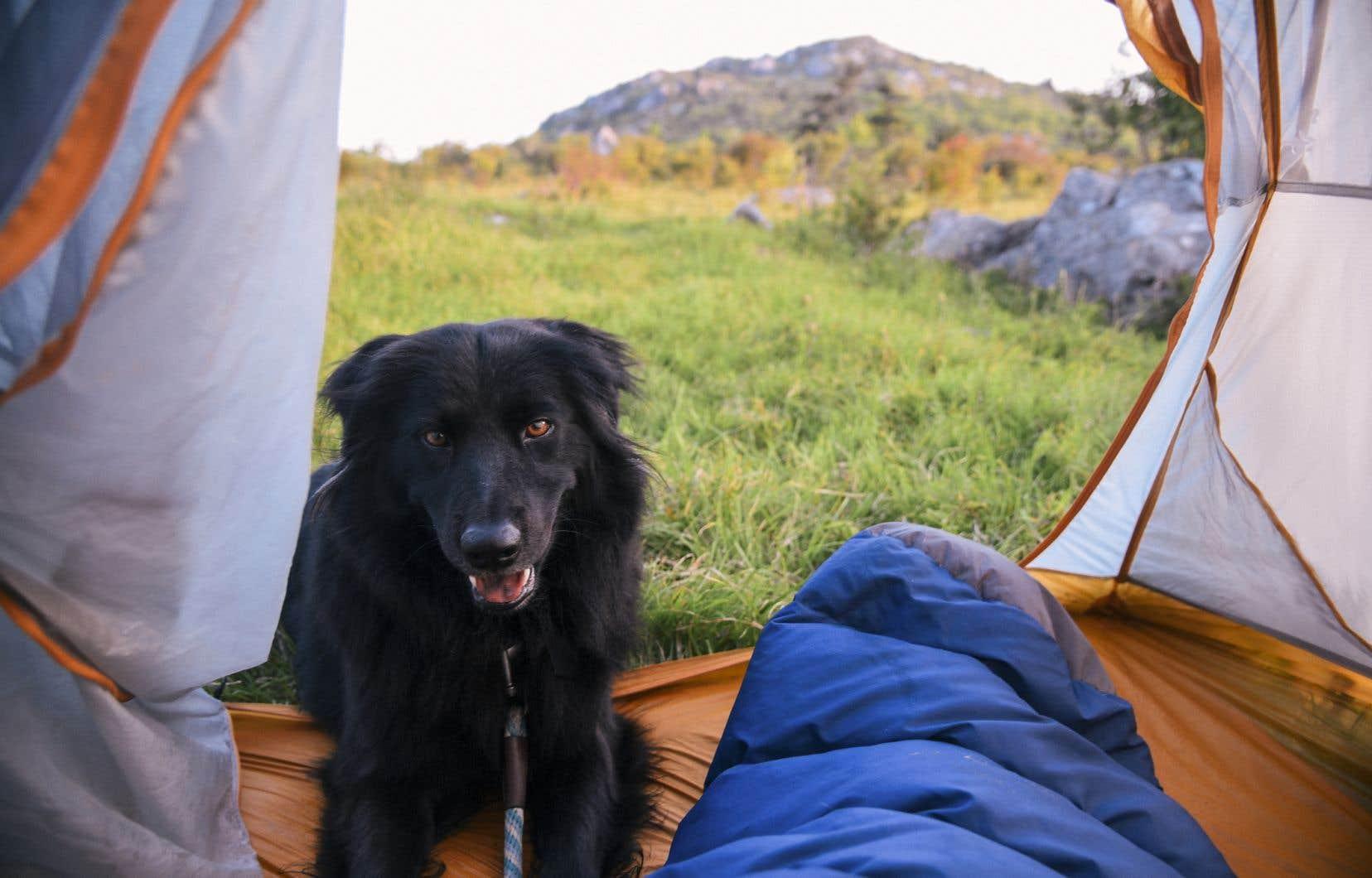 On aime le camping, au Québec. Encore plus depuis un an, alors que l'impératif de «bulle familiale» s'accorde bien avec un mono-hébergement en tente ou en prêt-à-camper.