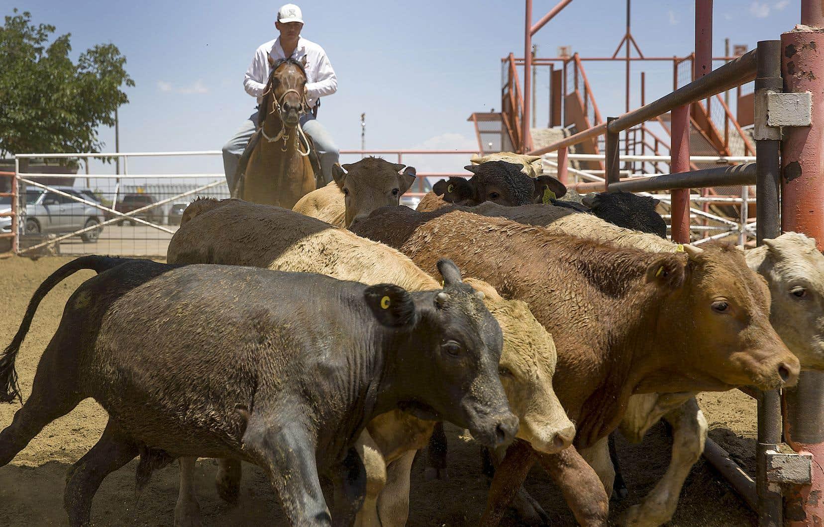 La production animale mondiale accélère la destruction des écosystèmes naturels et la crise climatique, conclut un récent rapport de l'organisme britannique Chatam House.