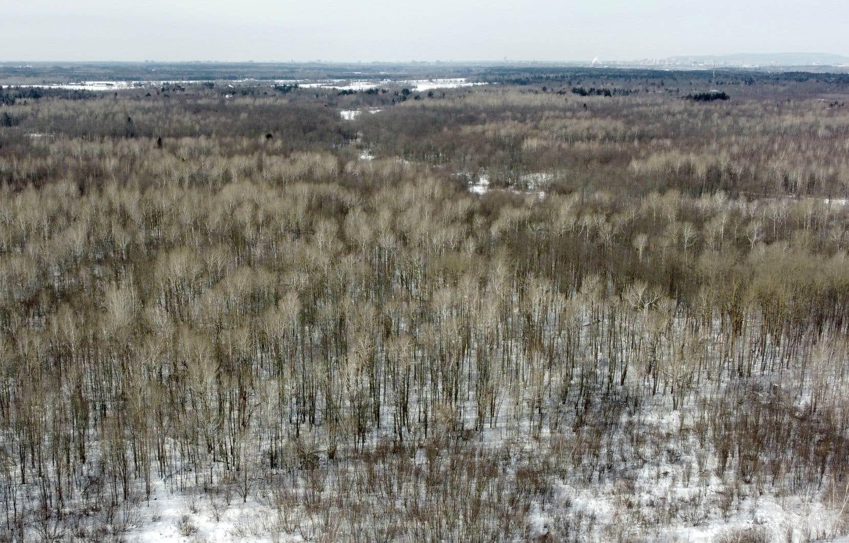 La proposition présentée par les Algonquins de l'Ontario et un grand promoteur immobilier vise à transformer 445 hectares de terrain à environ 20 kilomètres du centre d'Ottawa en une nouvelle communauté.