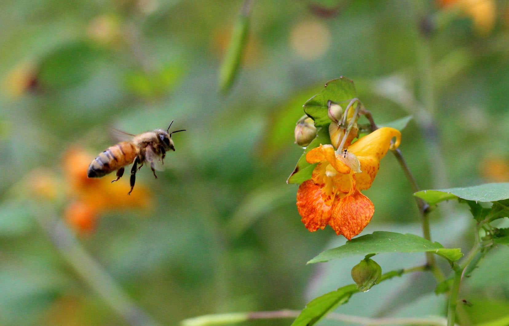 La cléistogamie est présente chez 40 familles de plantes à fleurs, comme les impatientes et les violettes.
