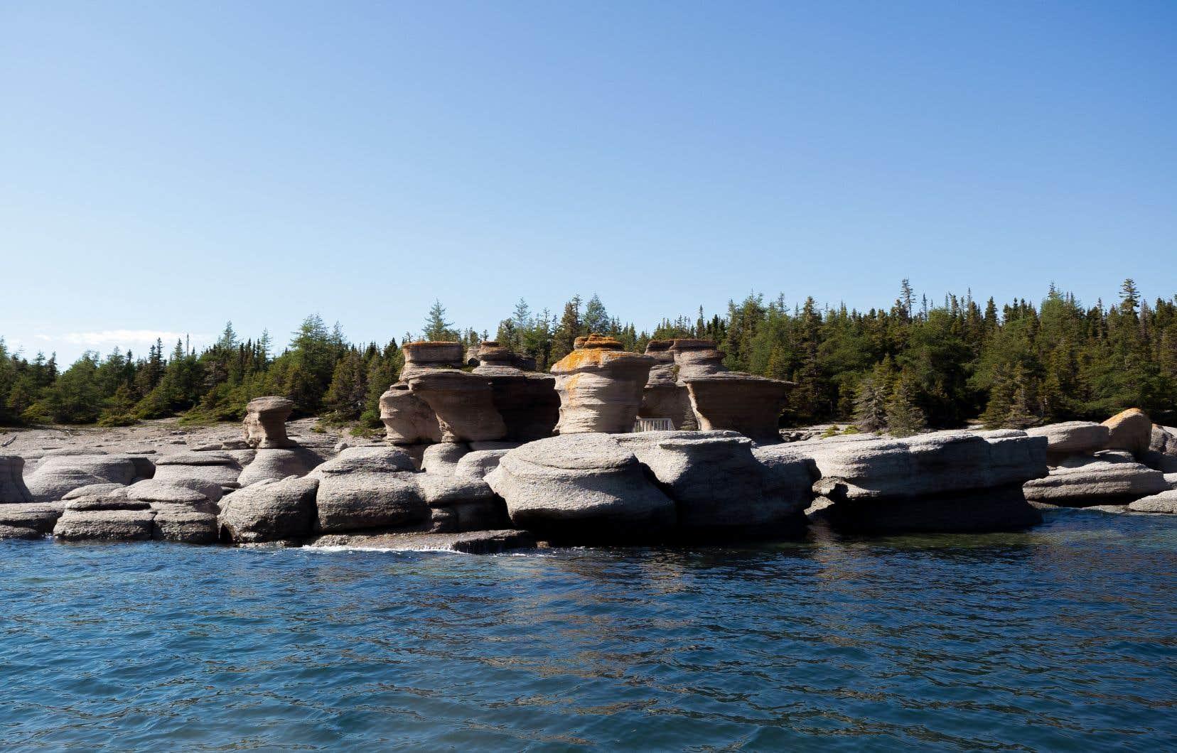 En plus des géants de calcaire sculptés par les vents et les marées, la beauté de l'archipel réside aussi dans le fait qu'il regorge de plantes marines savoureuses et étonnamment méconnues de la gastronomie québécoise.