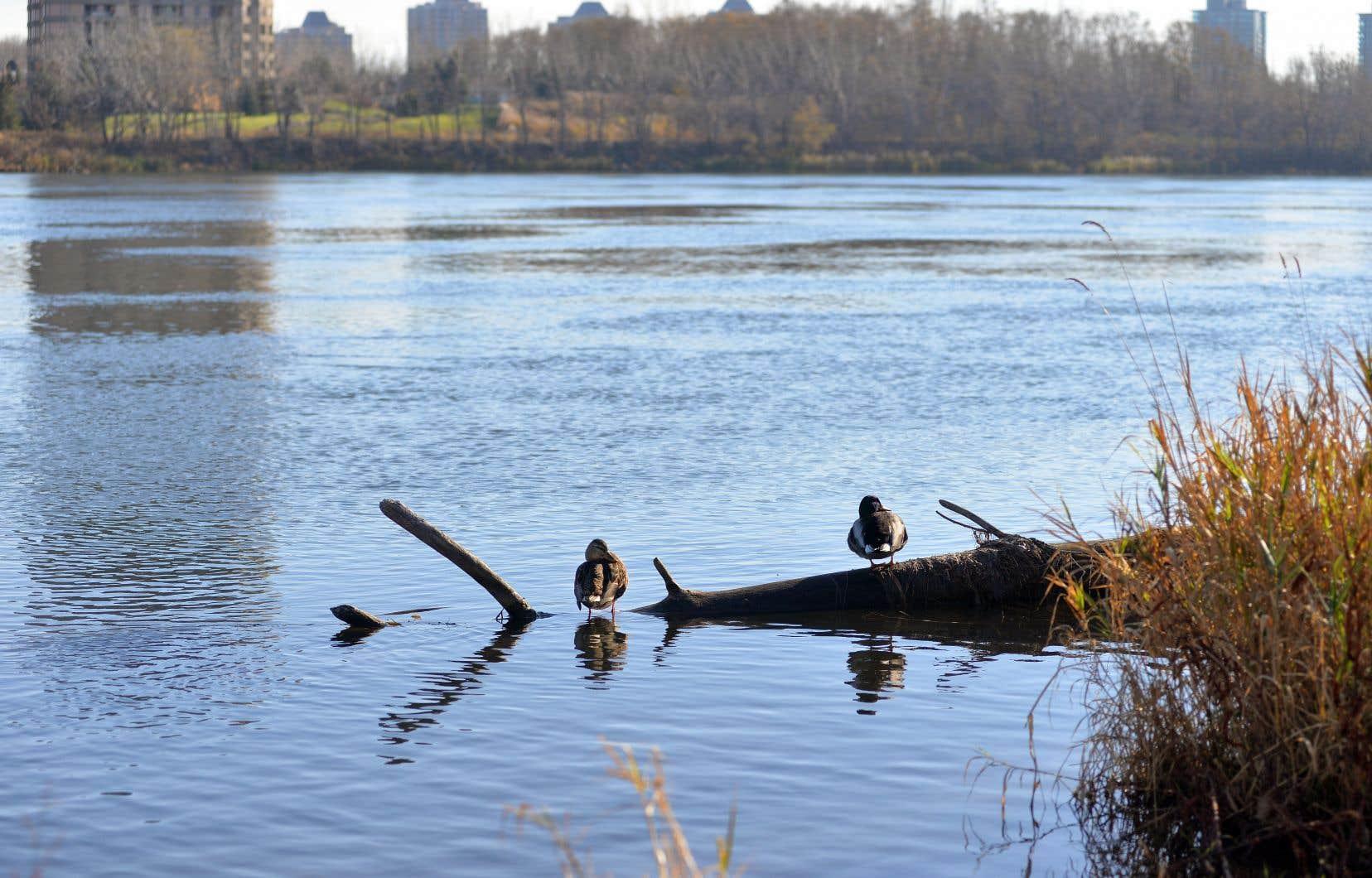 Selon une étude publiée l'an dernier par des chercheurs de l'Université McGill, la pollution par les microplastiques est très présente dans les sédiments du Saint-Laurent.
