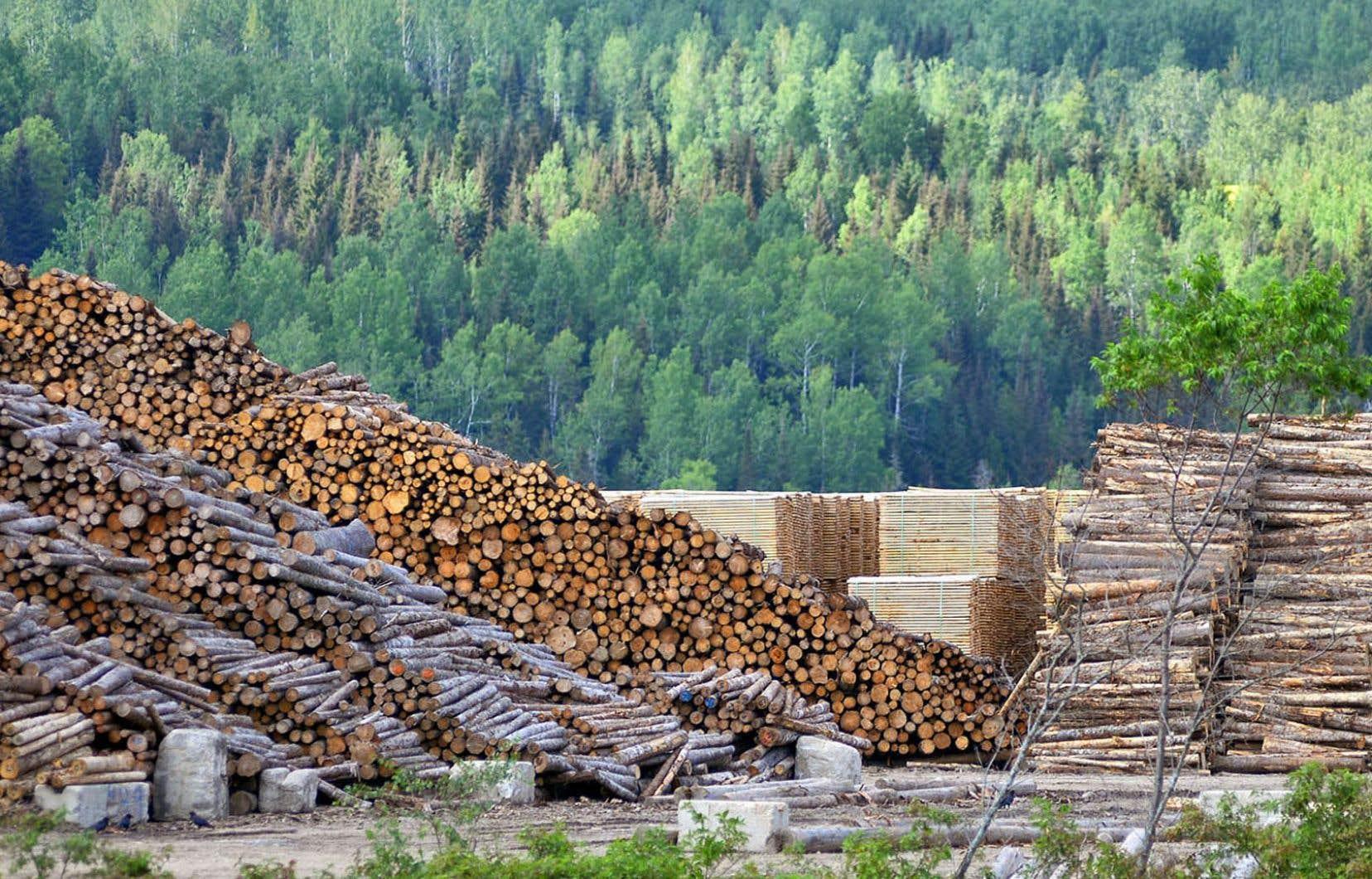 «Avec sa nouvelle Stratégie nationale de production de bois lancée en catimini à la veille de Noël en 2020, le MFFP n'a pas aidé sa cause en annonçant un accroissement du niveau de récolte de la forêt publique basé sur l'hypothèse d'une augmentation future de la production de bois qui résulterait d'interventions sylvicoles», croit l'auteur.