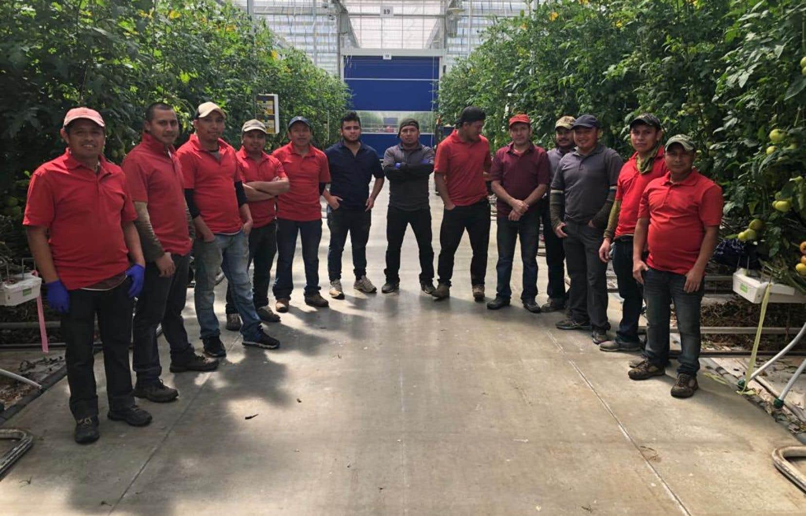 Un groupe de travailleurs temporaires dans les serres Demers à Drummondville, incluant Elman Diaz