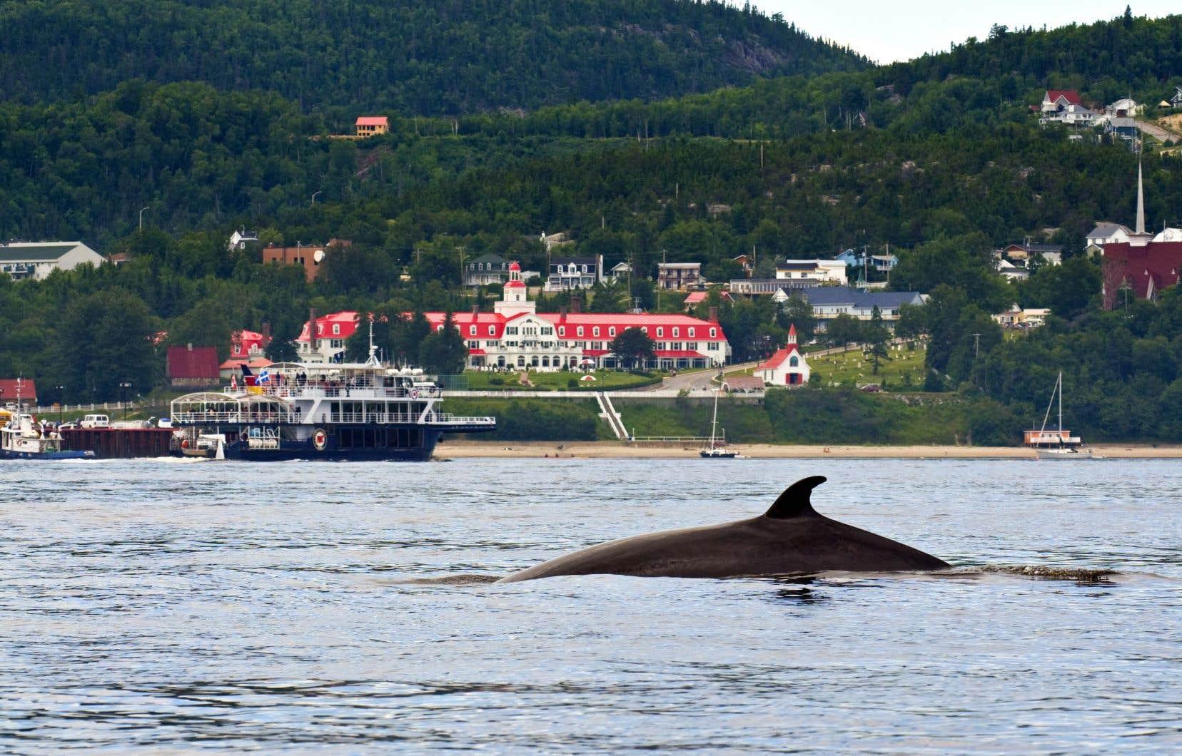La porte d'entrée de la Côte-Nord est le village de Tadoussac, qui est aussi le point de départ de la route des Baleines et l'endroit par excellence pour observer ces mammifères marins.