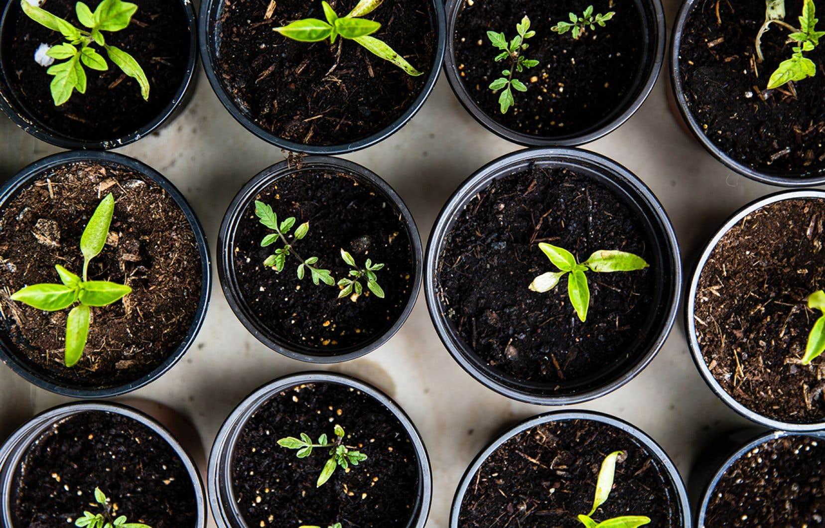 C'est le moment de jardiner dans la maison avec nos semis intérieurs et si vous les démarrez vous-mêmes, ils auront besoin d'une bonne dose de lumière.