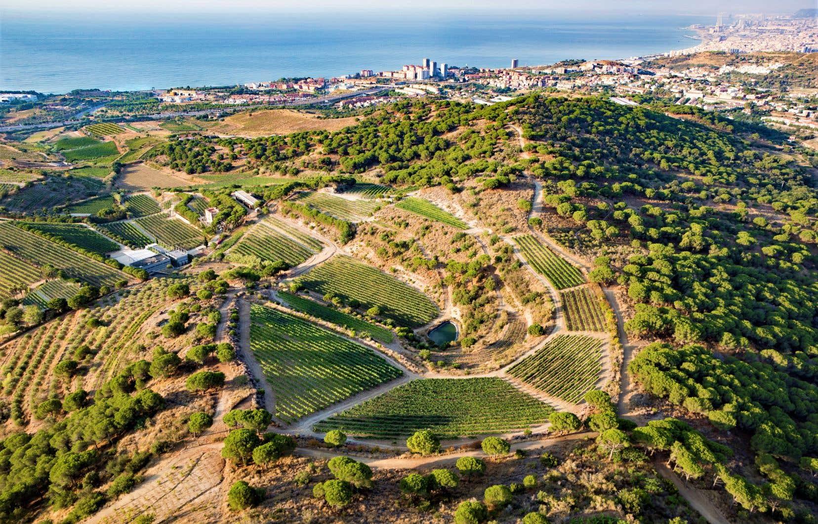 À vol d'oiseau, les vignobles Alta Allela Mirgin et Cellar de les Aus (Cave aux oiseaux en catalan) de la famille Pujol-Busquets Guillén sont à une petite dizaine de kilomètres de Barcelone, bordés par le parc naturel de la Serralada de Marina, avec vue sur mer s'il vous plaît
