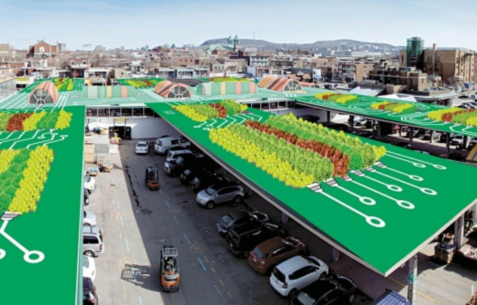 Les végétaux occuperont 30 % de la superficie totale de l'œuvre et le reste sera peint. Pas de fleurs, que des laitues (et peut-être des choux).<br />