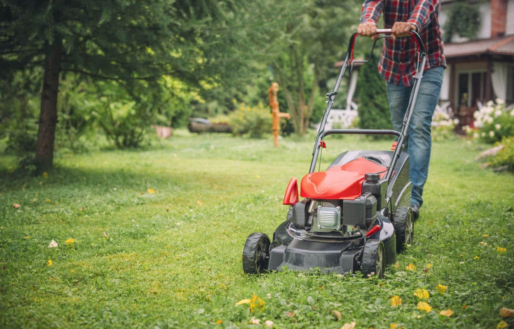 Sur les pelouses trop tondues, la diversité des invertébrés et des plantes diminue, tandis que les mauvaises herbes et les parasites prolifèrent.
