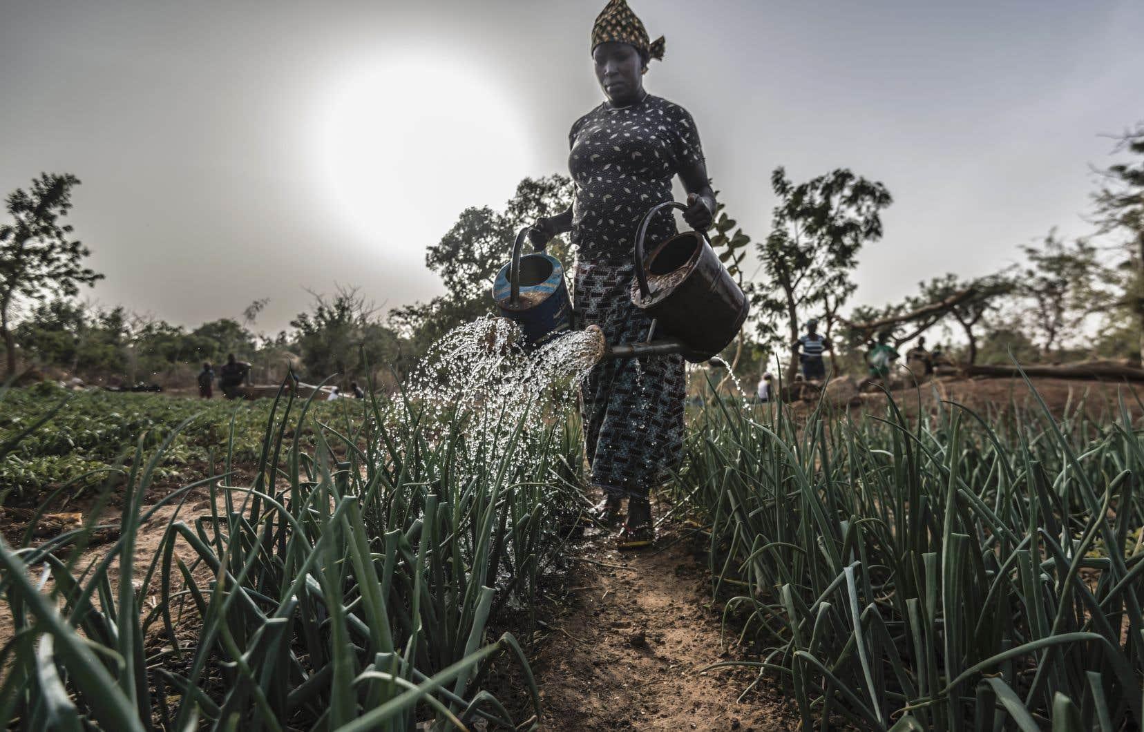 Aguiratou Ouedraogo, une agricultrice du Burkina Faso, arrose ses cultures maraîchères, qui serviront notamment à nourrir ses sept enfants.