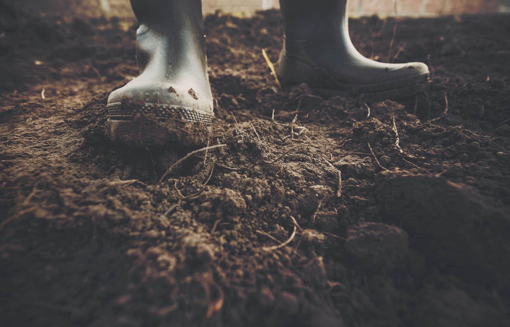 Pour ceux et celles qui ont déjà une parcelle de jardin prête à être cultivée, le signal pour commencer la préparation est principalement lié au drainage de l'eau.