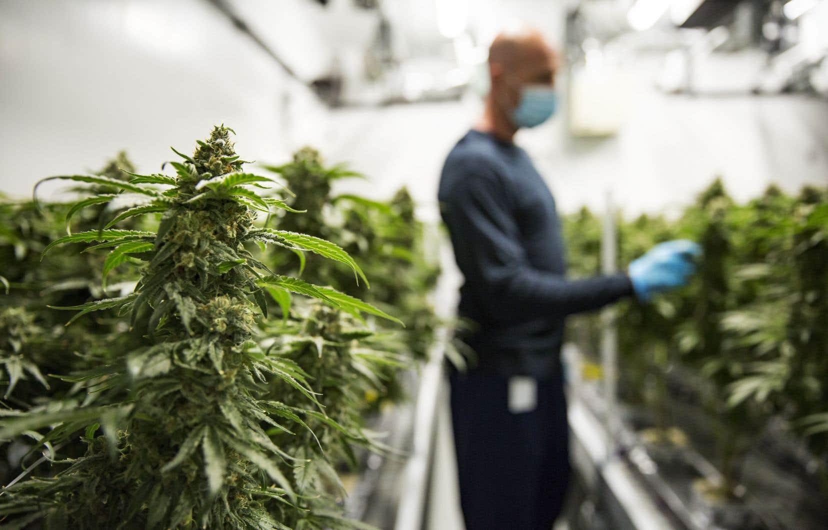 Le secteur du cannabis, tout comme celui des cryptomonnaies et de la technologie, sont parmis les fonds négociés en bourse les plus populaires, qui sont prisés par les investisseurs autonomes.