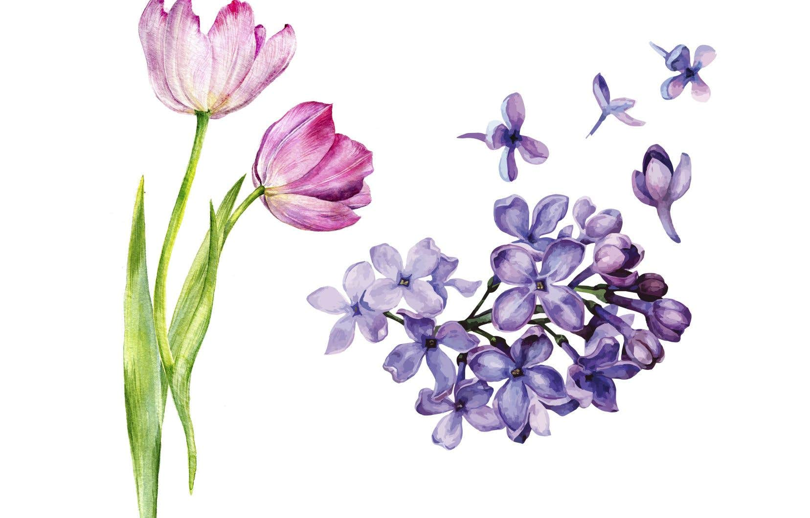 Signe que l'été s'en vient, c'est la saison des tulipes et des lilas!