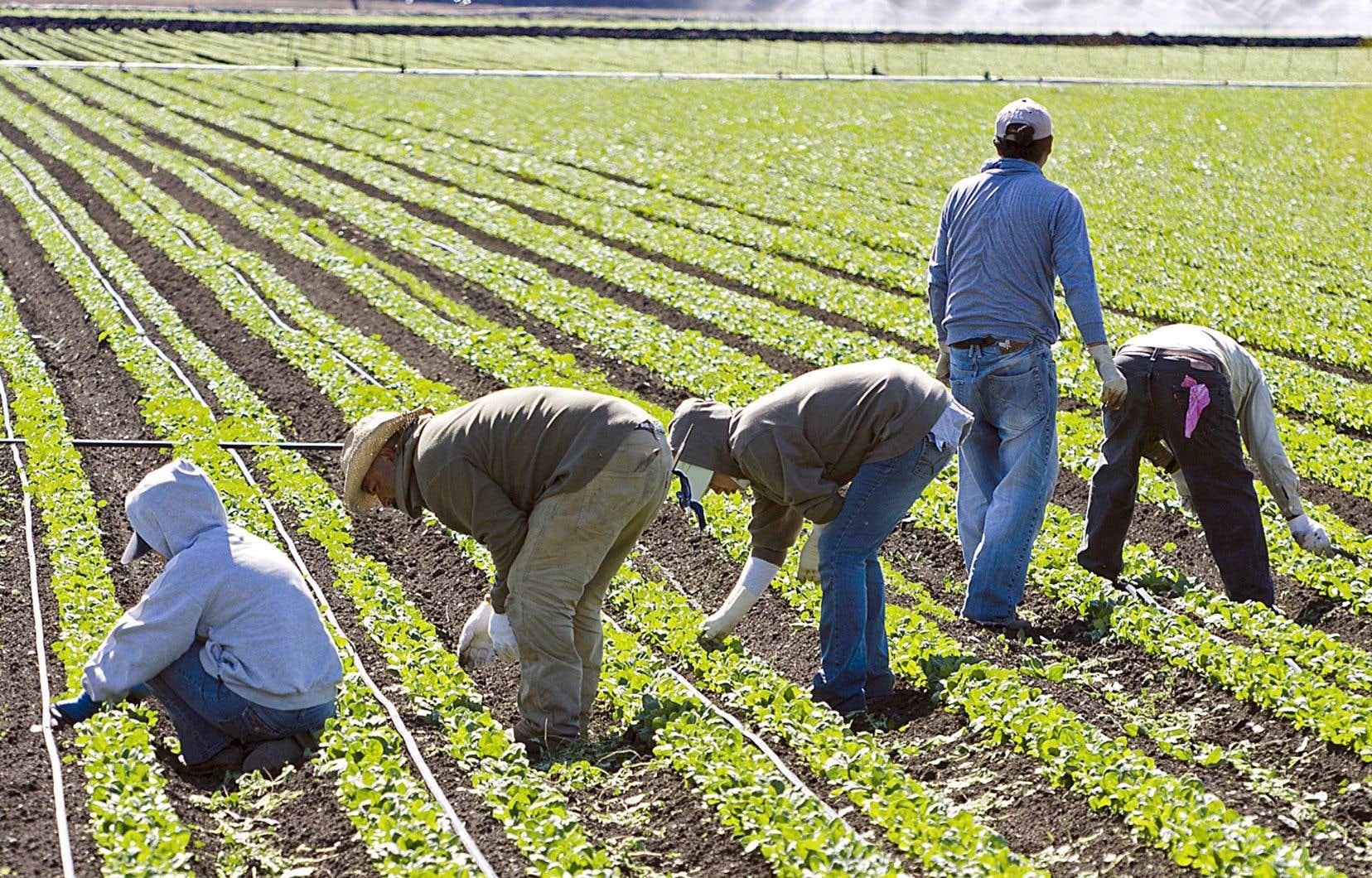 La situation des travailleurs est difficile entre autres en raison de l'éloignement familial et du rythme intense de travail (souvent 17 ou 18 heures par jour à cause de la pénurie de main-d'oeuvre).