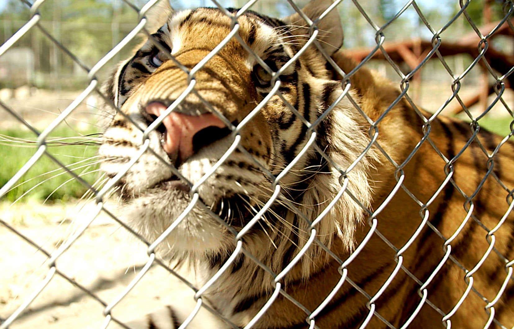 «Zoo, une cage dorée?», une  production d'Urbania réalisée par Erika Reyburn («Enquêtes  Incendies»)