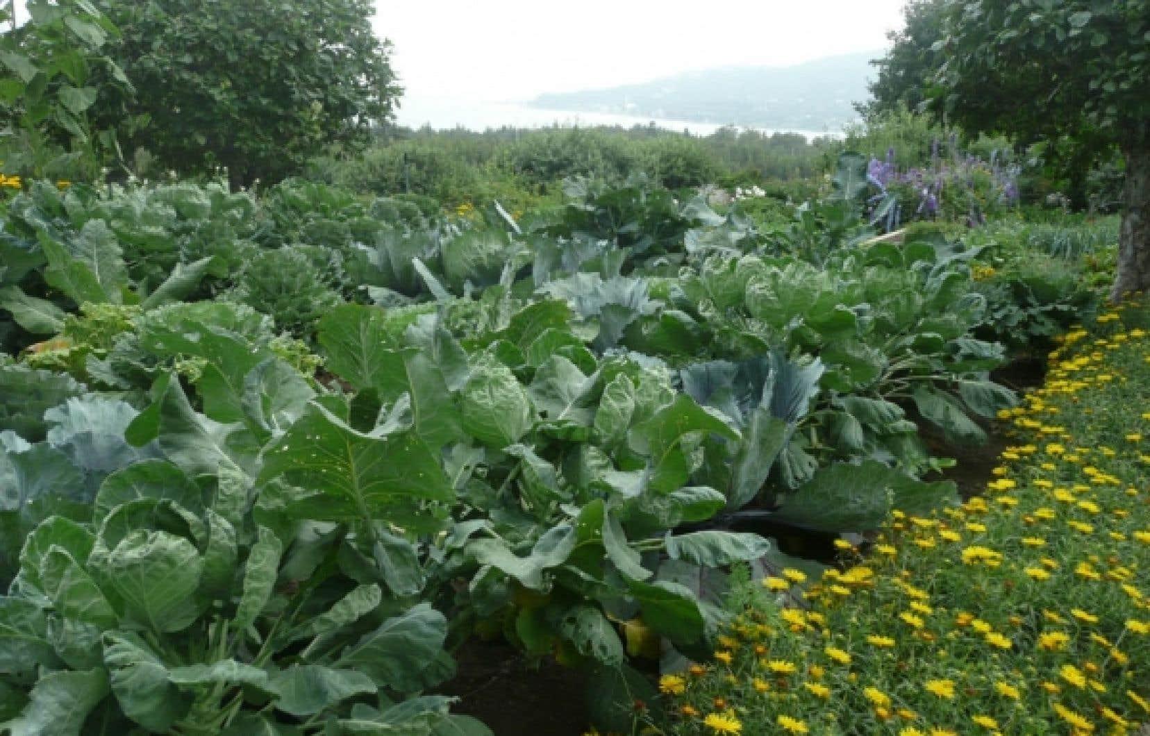 L&rsquo;essentiel en jardinage r&eacute;side dans les amendements et la fertilisation raisonn&eacute;e. <br />