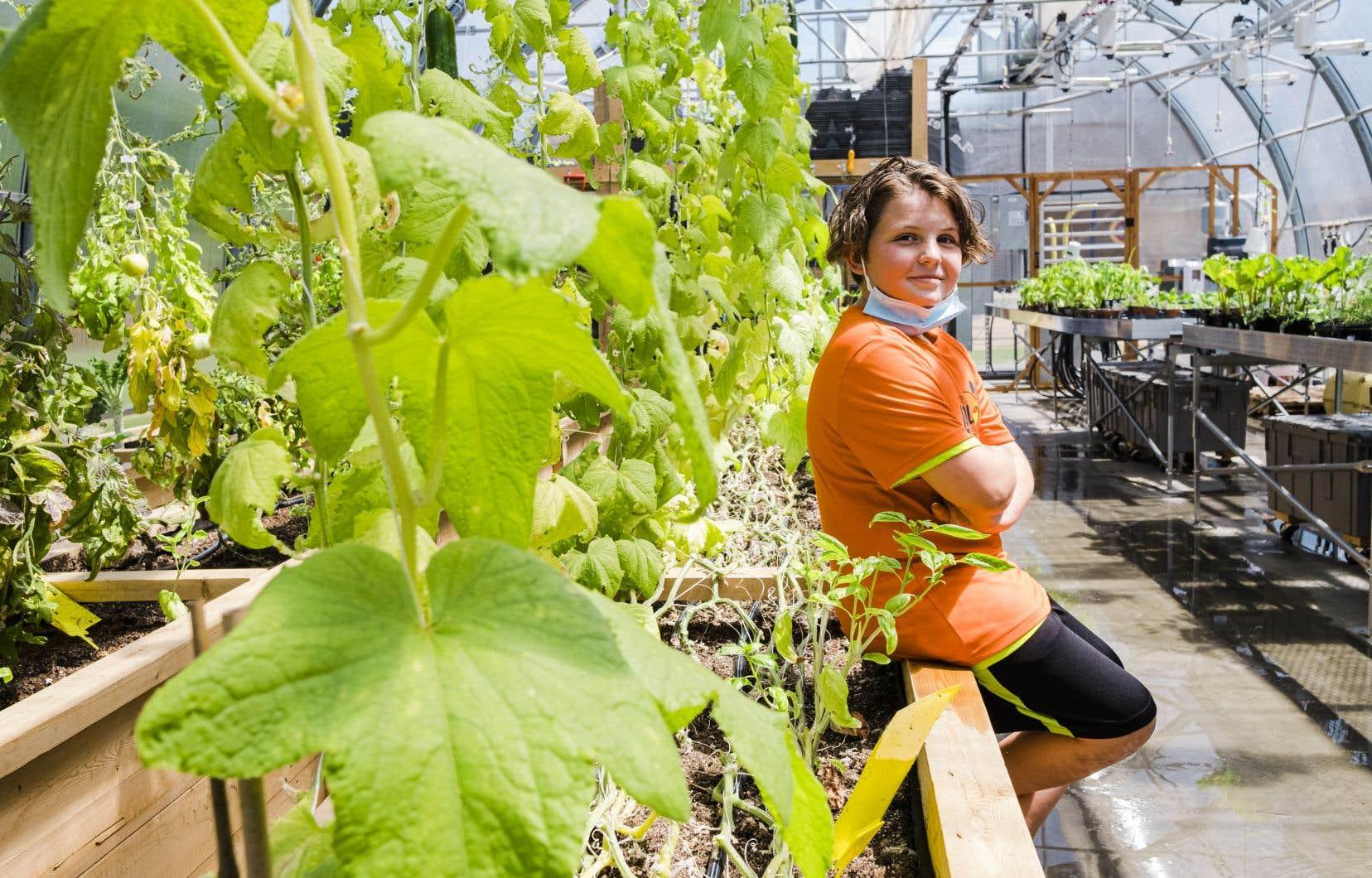 Vient de s'ajouter à l'école primaire Louis-de-France, àTrois-Rivières, une immense serre quatre saisons, oasis regorgeant de semis et de plants de concombres qui montent en vrille vers le soleil.