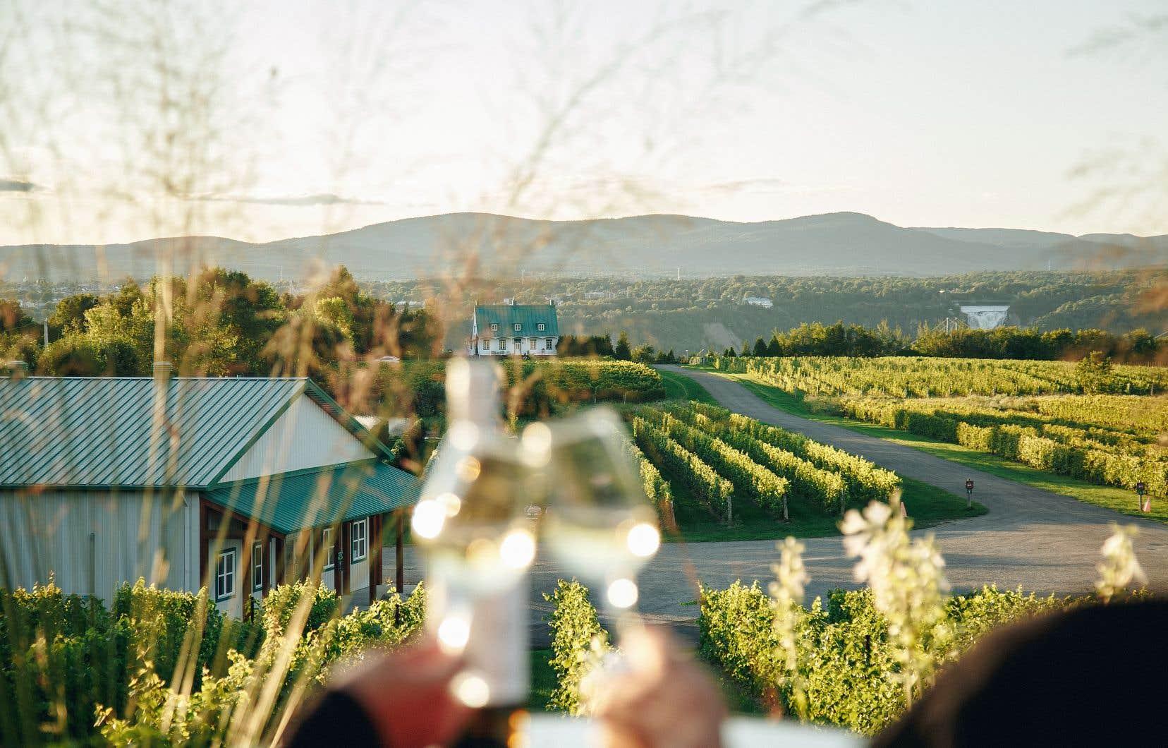 Situé sur l'île d'Orléans, le Vignoble Sainte-Pétronille propose aux visiteurs de s'arrêter à son restaurant, qui offre une vue sur la chute Montmorency.