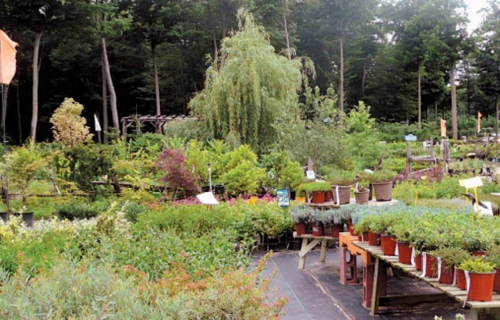 La P&eacute;pini&egrave;re Villeneuve, &agrave; L&rsquo;Assomption, offre une diversit&eacute; de services et de plantes rarement &eacute;gal&eacute;e, dans un d&eacute;cor enchanteur.<br />