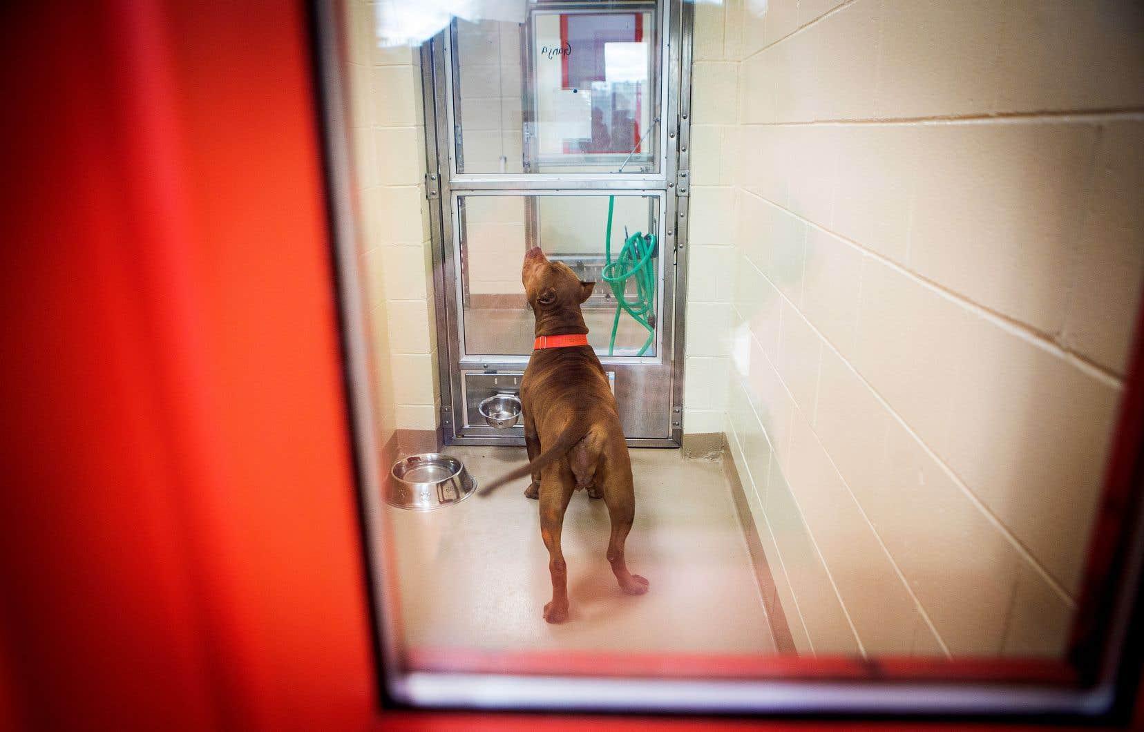 Les «chiens COVID», qui ont été adoptés juste avant ou pendant le confinement, n'ont pas été exposés à un grand éventail de situations, ce qui peut les rendre extrêmement anxieux.