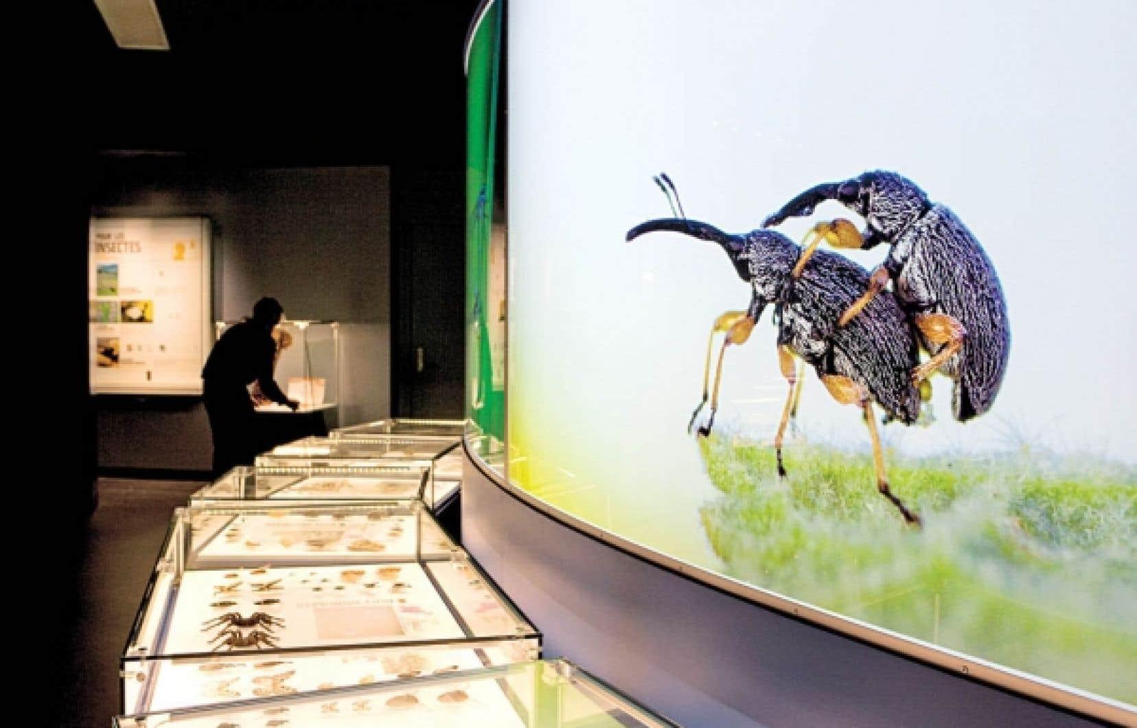 Dans Nous, les insectes, on avance au rythme des thèmes: l'alimentation, la reproduction, l'autodéfense.<br />