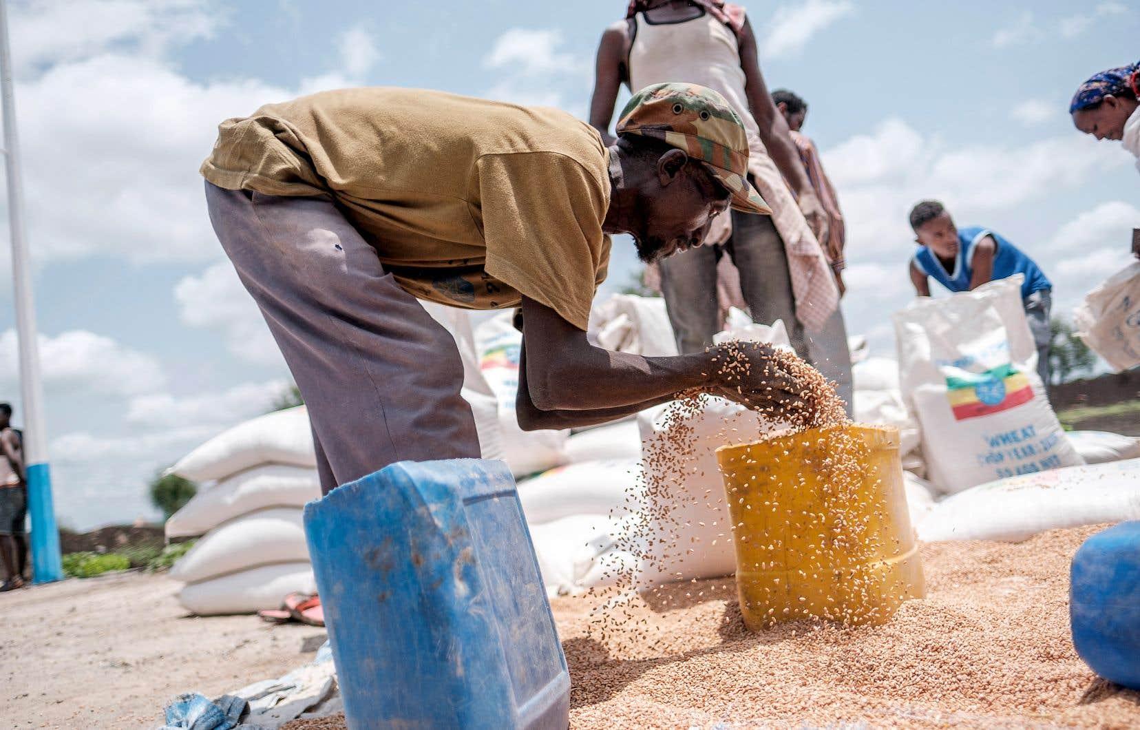 Un homme met du blé dans un contenant lors d'une distribution de nourriture organisée par le gouvernement d'Amhara près du village de Baker, dans la région nord du Tigré.