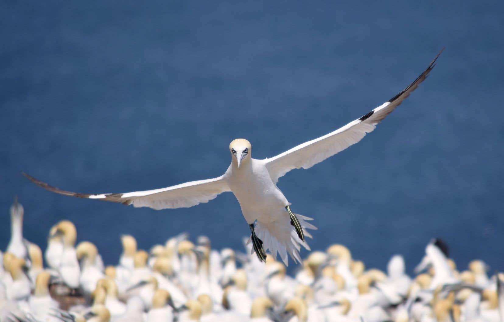 La Convention sur la diversité biologique plaide pour une meilleure protection des milieux marins et des espèces qui en dépendent.