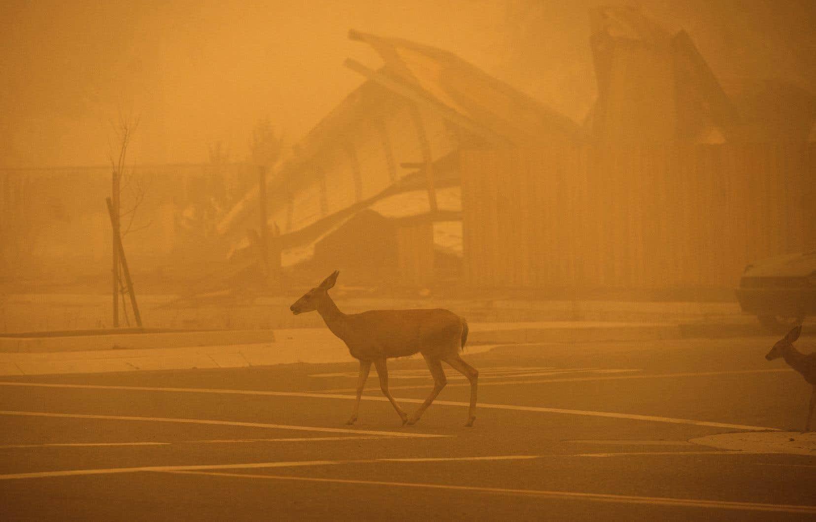 Greenville, une petite localité située dans le comté de Plumas, a été engloutie par les flammes en milieu de semaine.