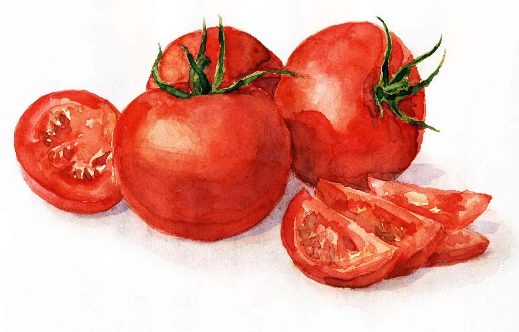 Selon ce que vous désirez faire avec vos tomates, les techniques de récolte diffèrent.