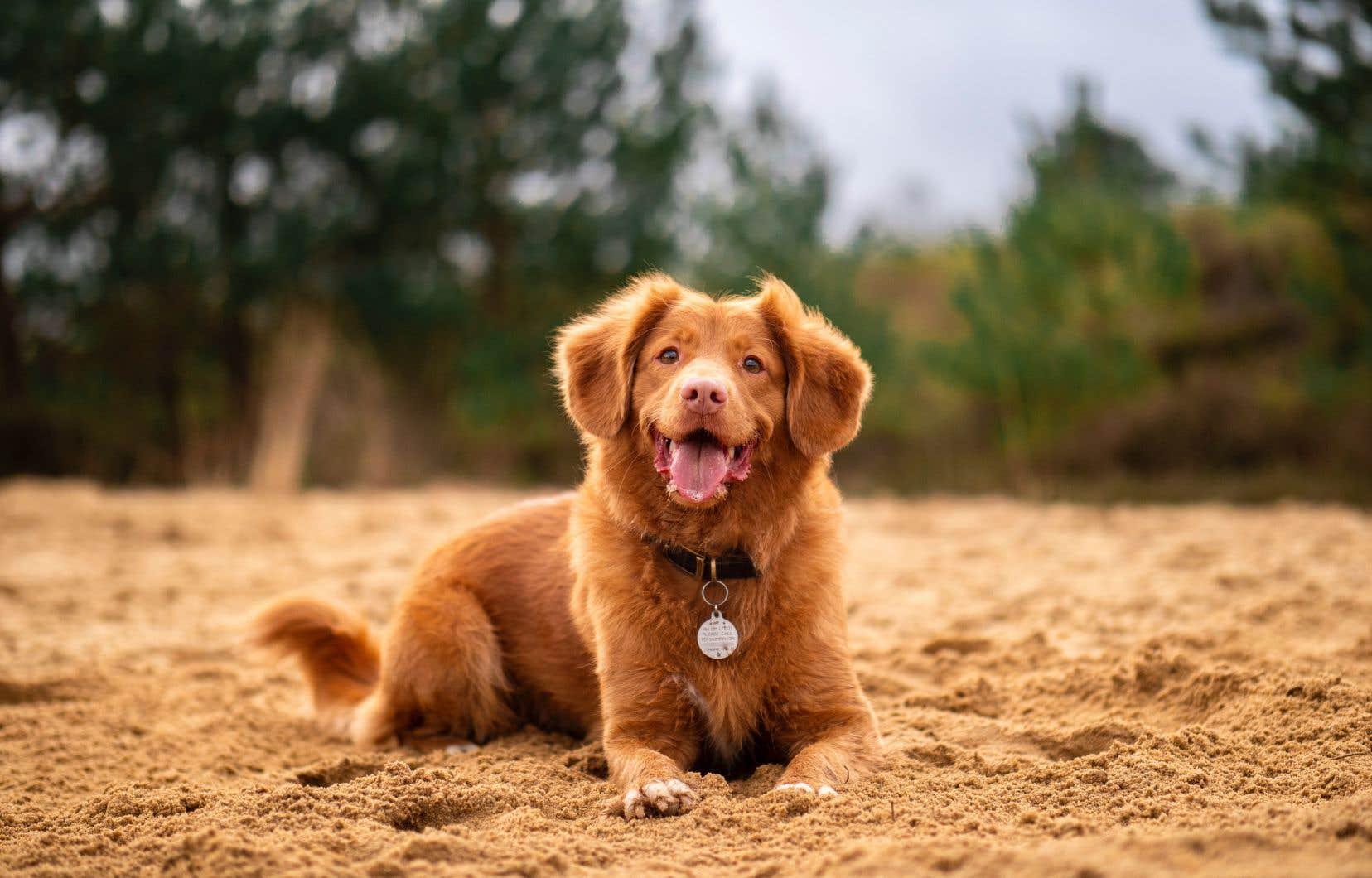 Aux quatre coins du Québec, les options d'hébergement qui acceptent nos compagnons canins ne manquent pas.
