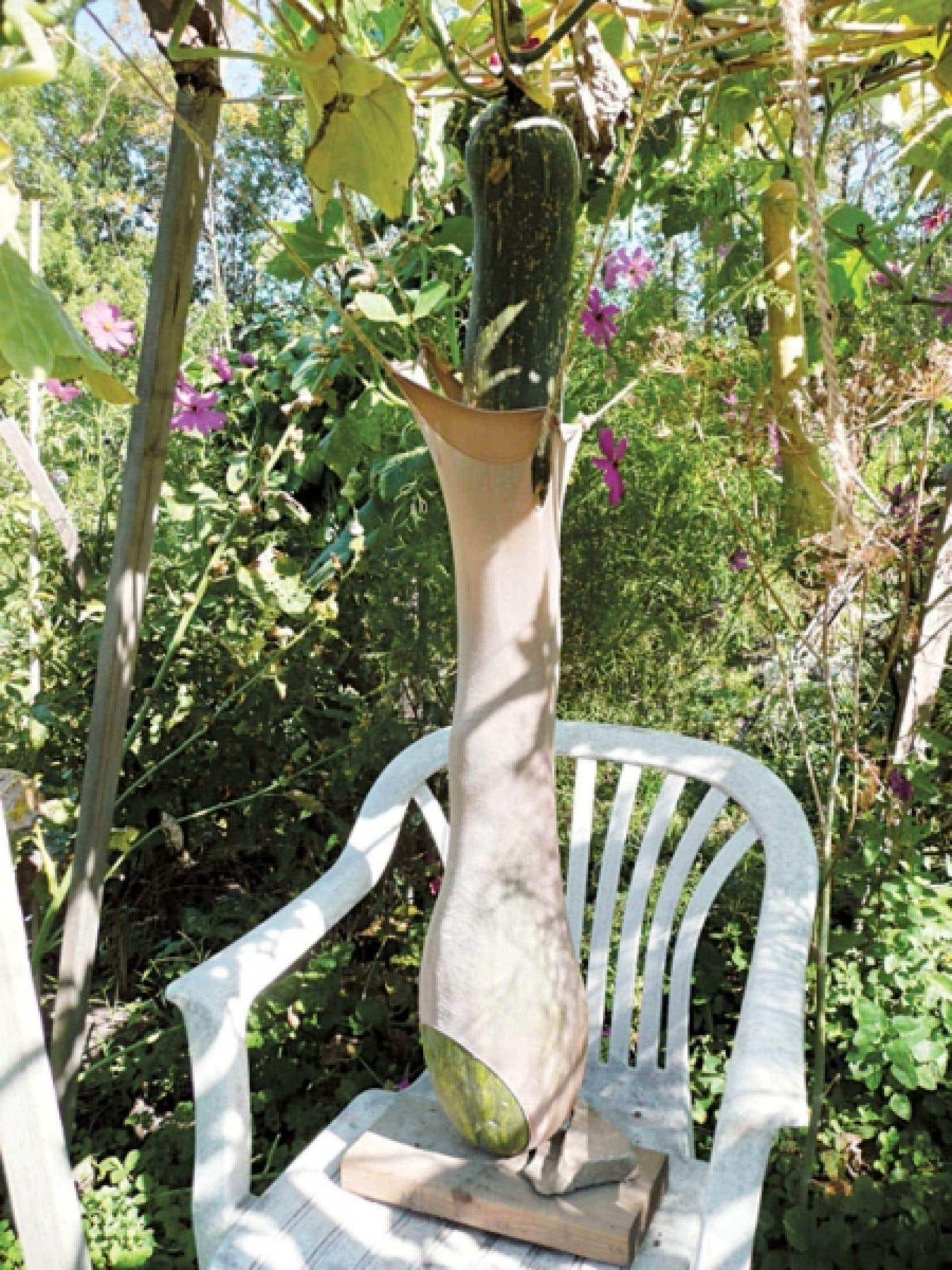 La géante courge d'Éléna au jardin communautaire Les Églantiers est si lourde qu'elle doit être soutenue par une chaise.