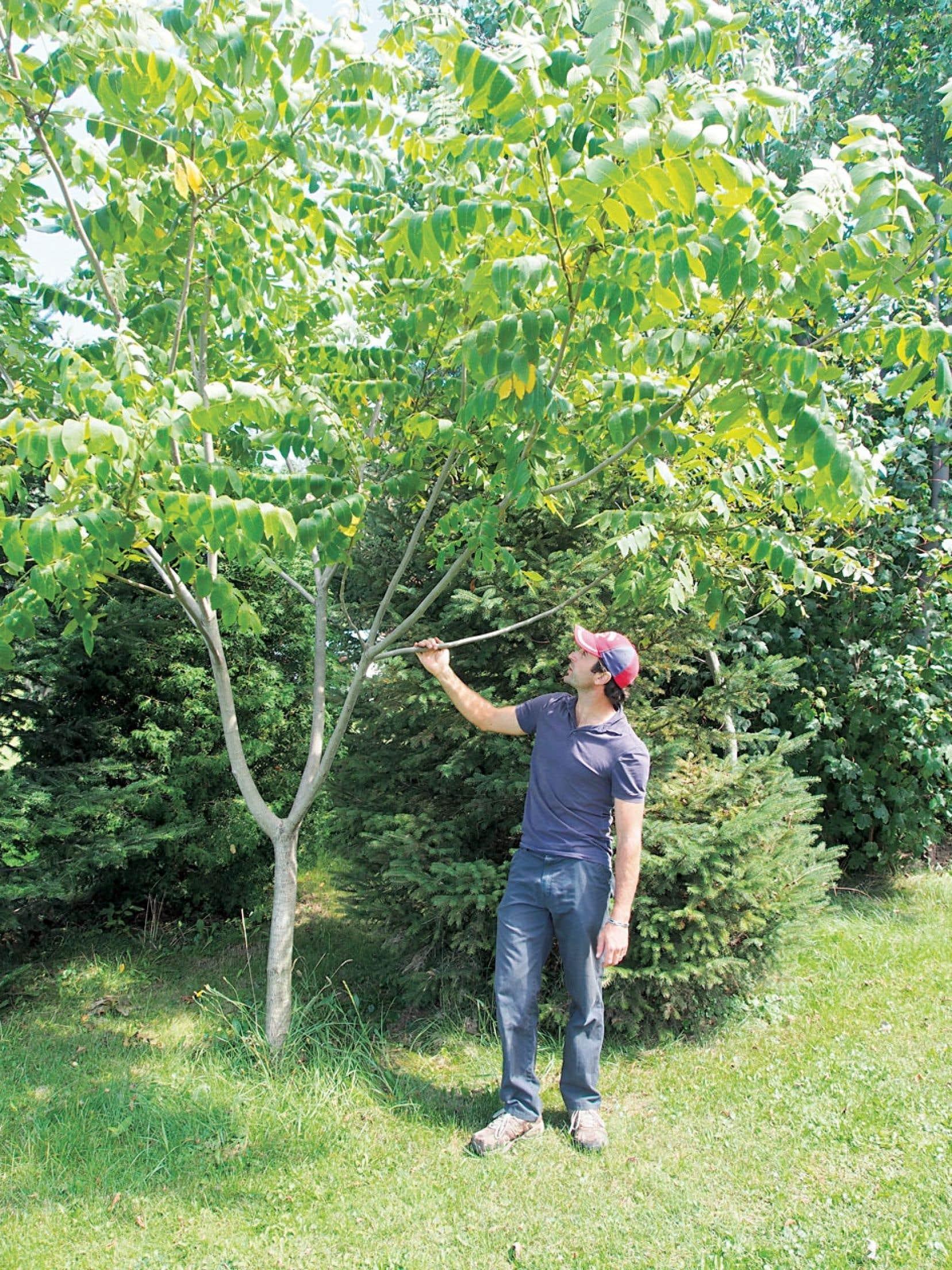 Marc-Olivier Harvey, propriétaire de la Pépinière Casse-Noisette, a pris le parti de nous faire découvrir des arbres à valeur ajoutée, en particulier les arbres à noix.