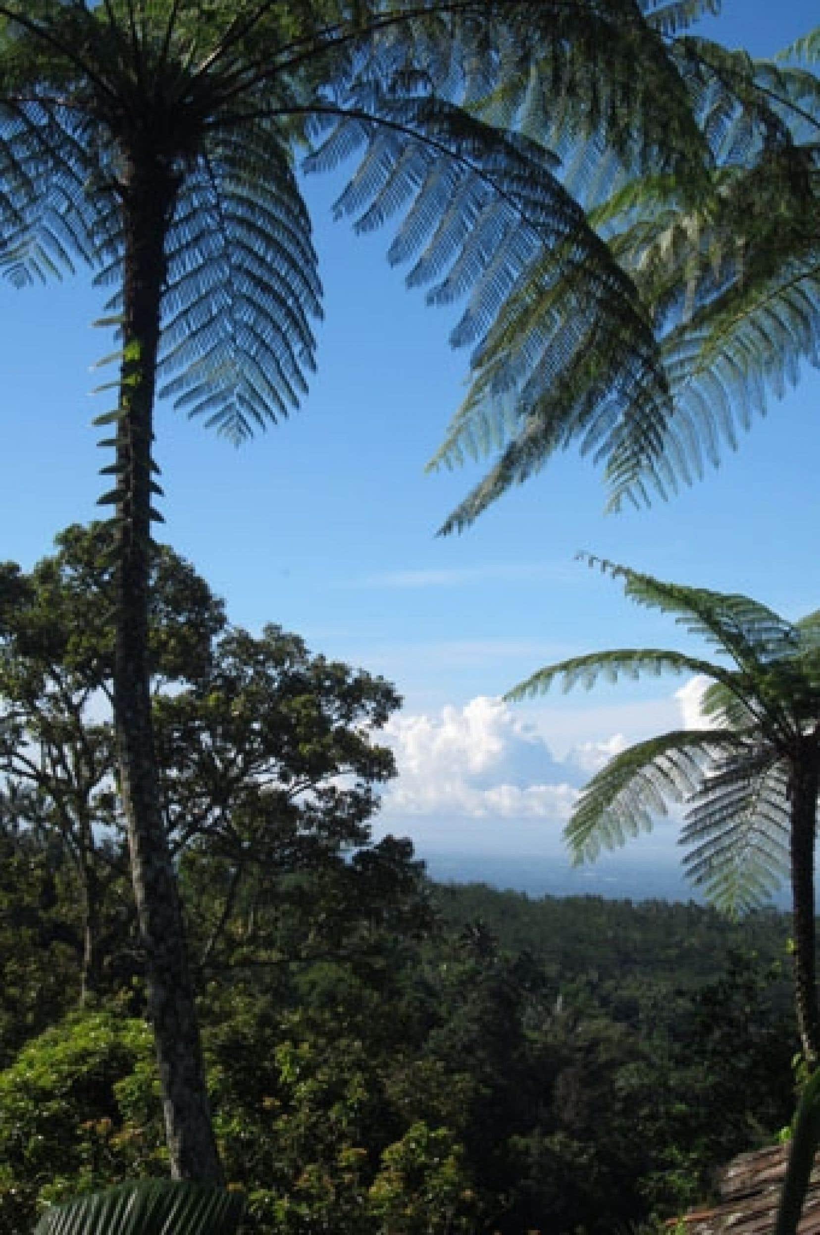 Une vue imprenable depuis le Sarinbuana Eco Lodge. Ci-dessous, à gauche: l'île jouit d'une végétation luxuriante digne de jardins d'Éden. À droite: un temple dans la région de Tabanan.