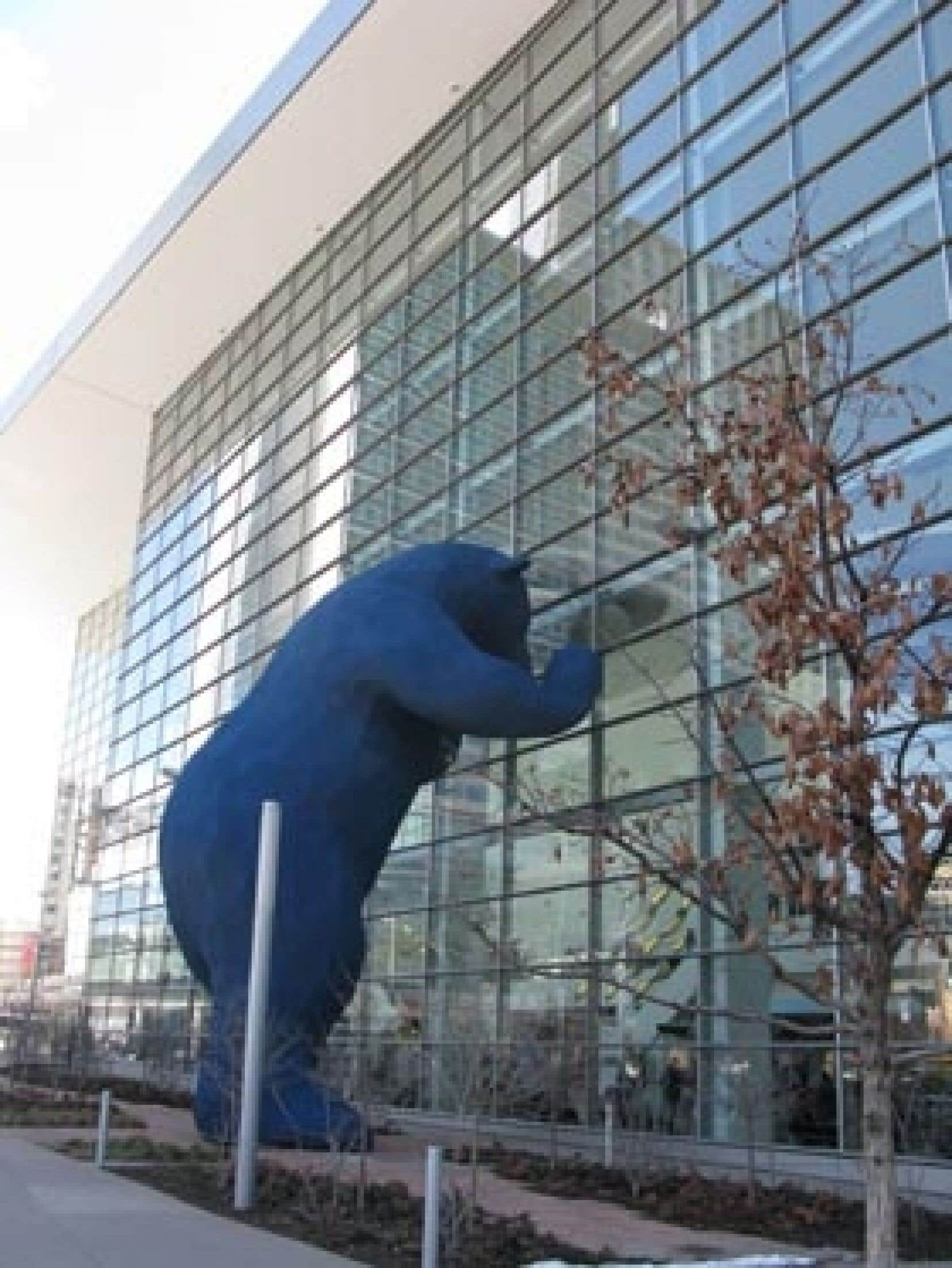 Un ours bleu géant regarde à travers les fenêtres du Colorado Convention Center: une sculpture en acier et fibre de verre de 12 mètres de haut. À voir, en route vers Boulder.