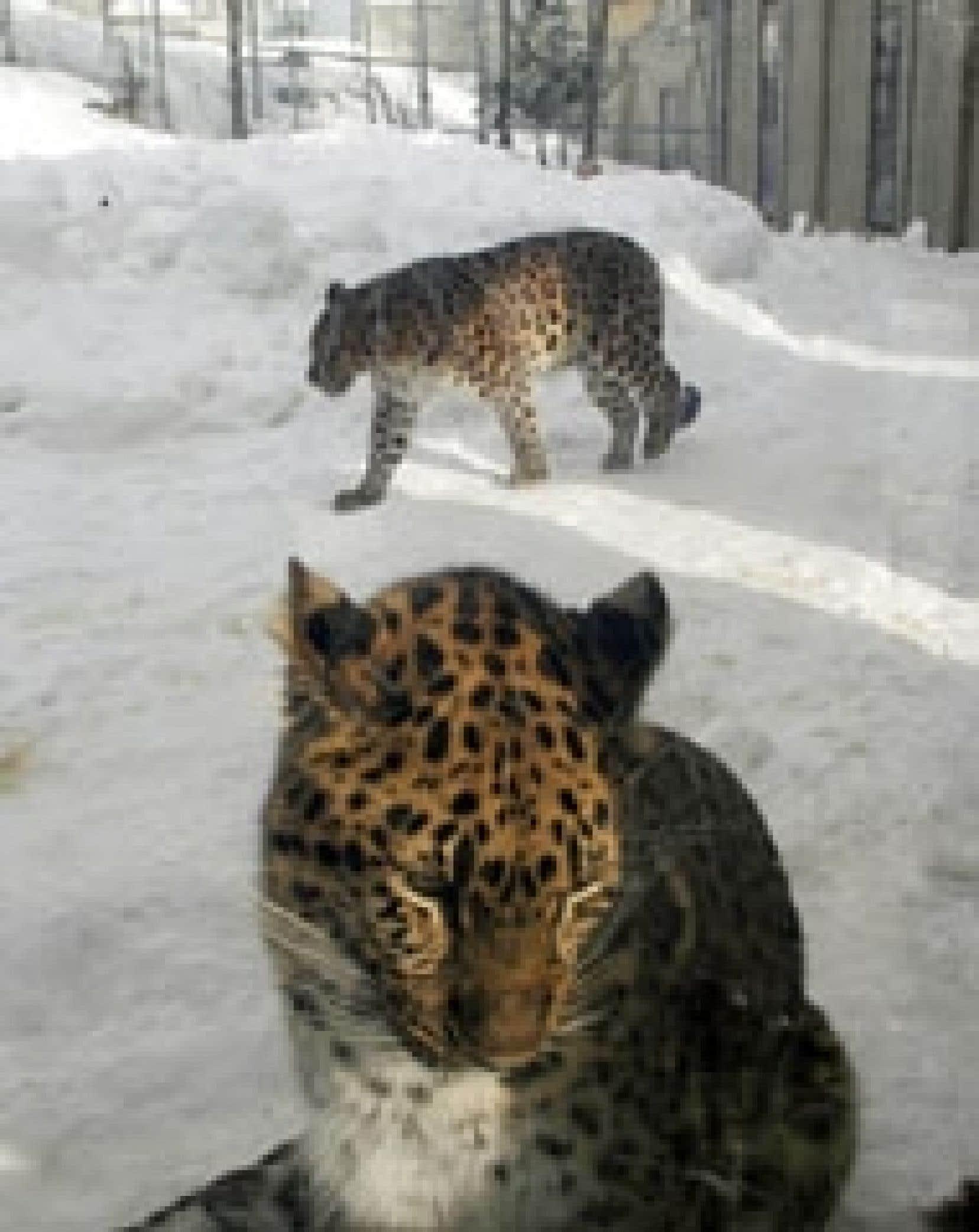Ces pensionnaires du zoo de Québec attendant une décision sur leur sort.