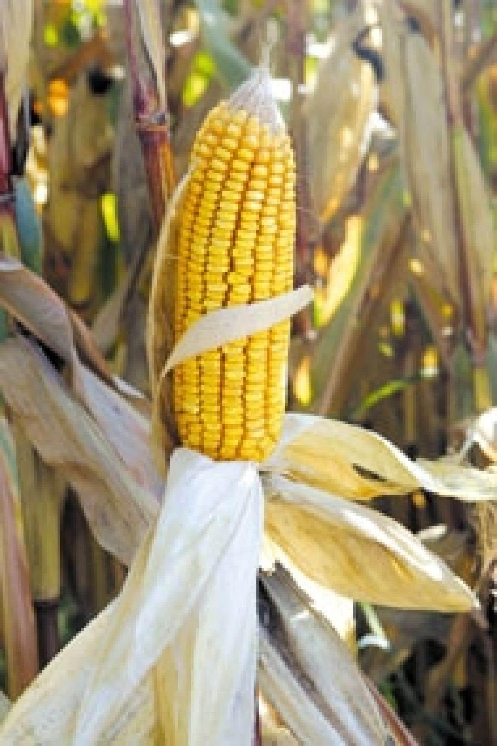 Les États-Unis, le Canada et l'Argentine avaient porté plainte en mai 2003 contre Bruxelles, estimant que le moratoire sur l'importation d'OGM était sans fondement scientifique et qu'il s'agissait en fait d'une mesure protectionniste en fa
