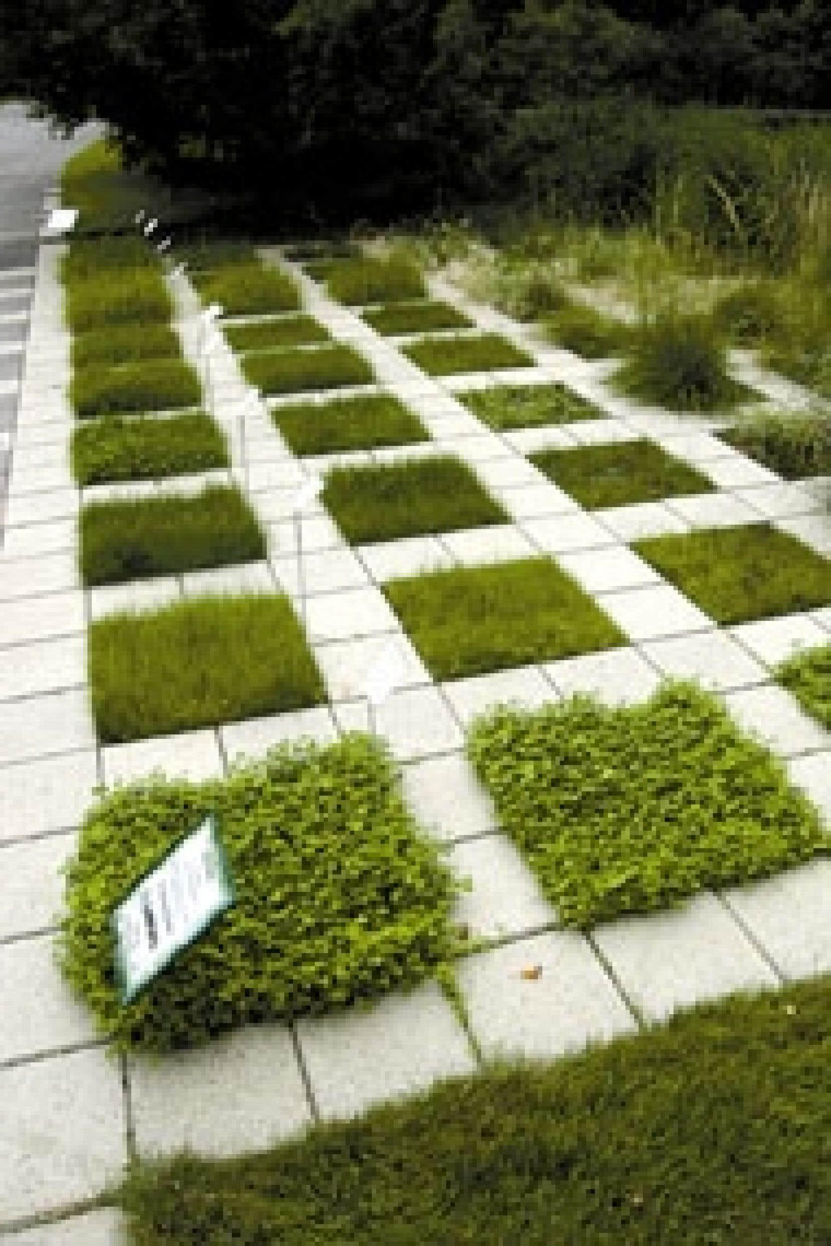 Voici quelques mélanges pour pelouse ou gazon…