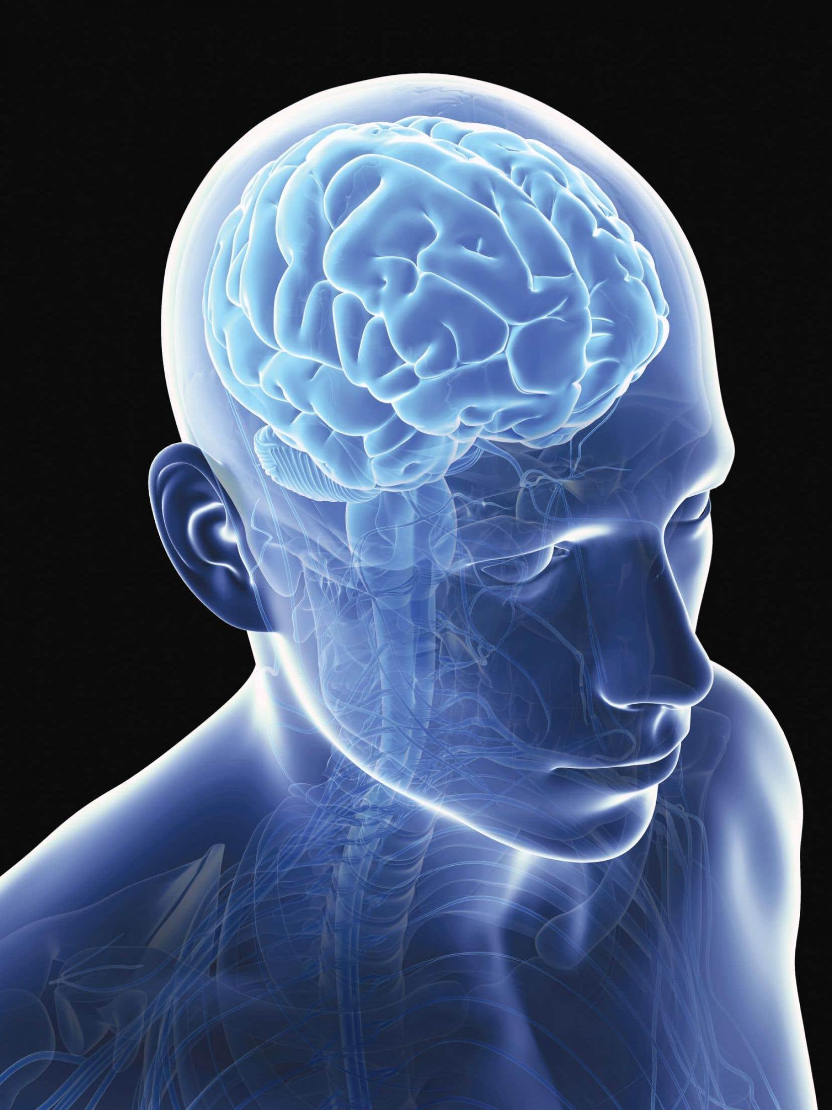 Les chercheurs de l'Institut universitaire de santé mentale Douglas ont passé deux ans à regarder sous le microscope des tranches de cerveau et à observer minutieusement les cellules de la matière blanche du cerveau de personnes dépressives qui s'étaient suicidées.