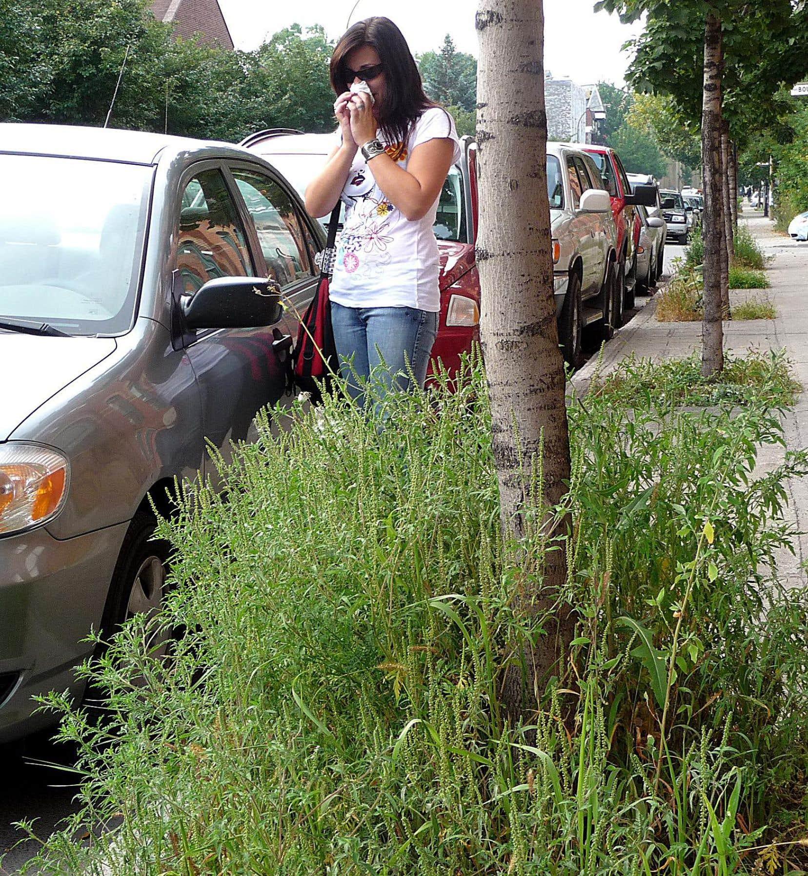 À Montréal, le temps de pollinisation de l'herbe à poux est passé de 40 à 68 jours entre1994 et2002, selon le ministère de la Santé.