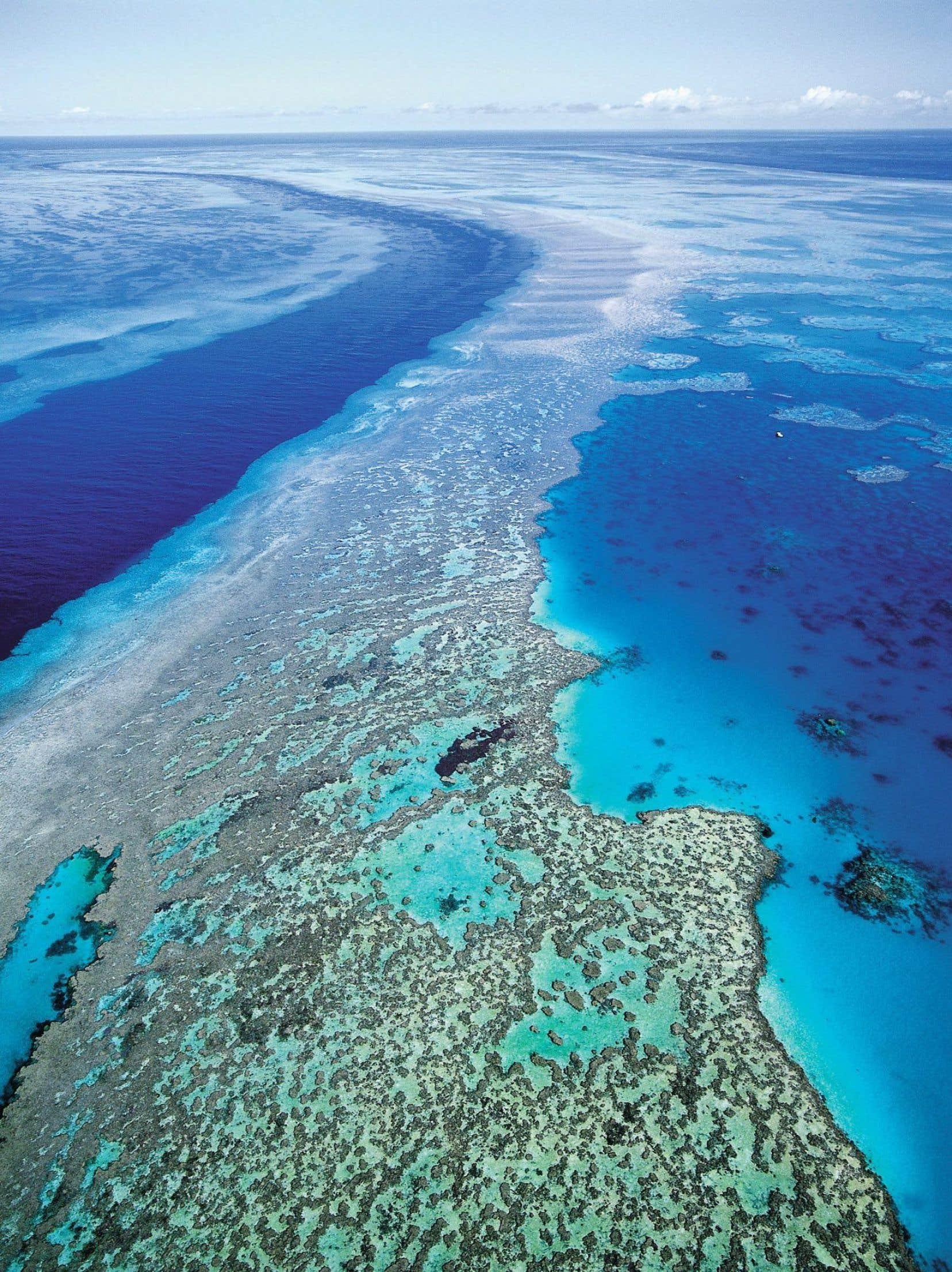 Selon les résultats d'une étude américaine publiée en 2013, la Grande Barrière a perdu la moitié de ses coraux en à peine trois décennies.