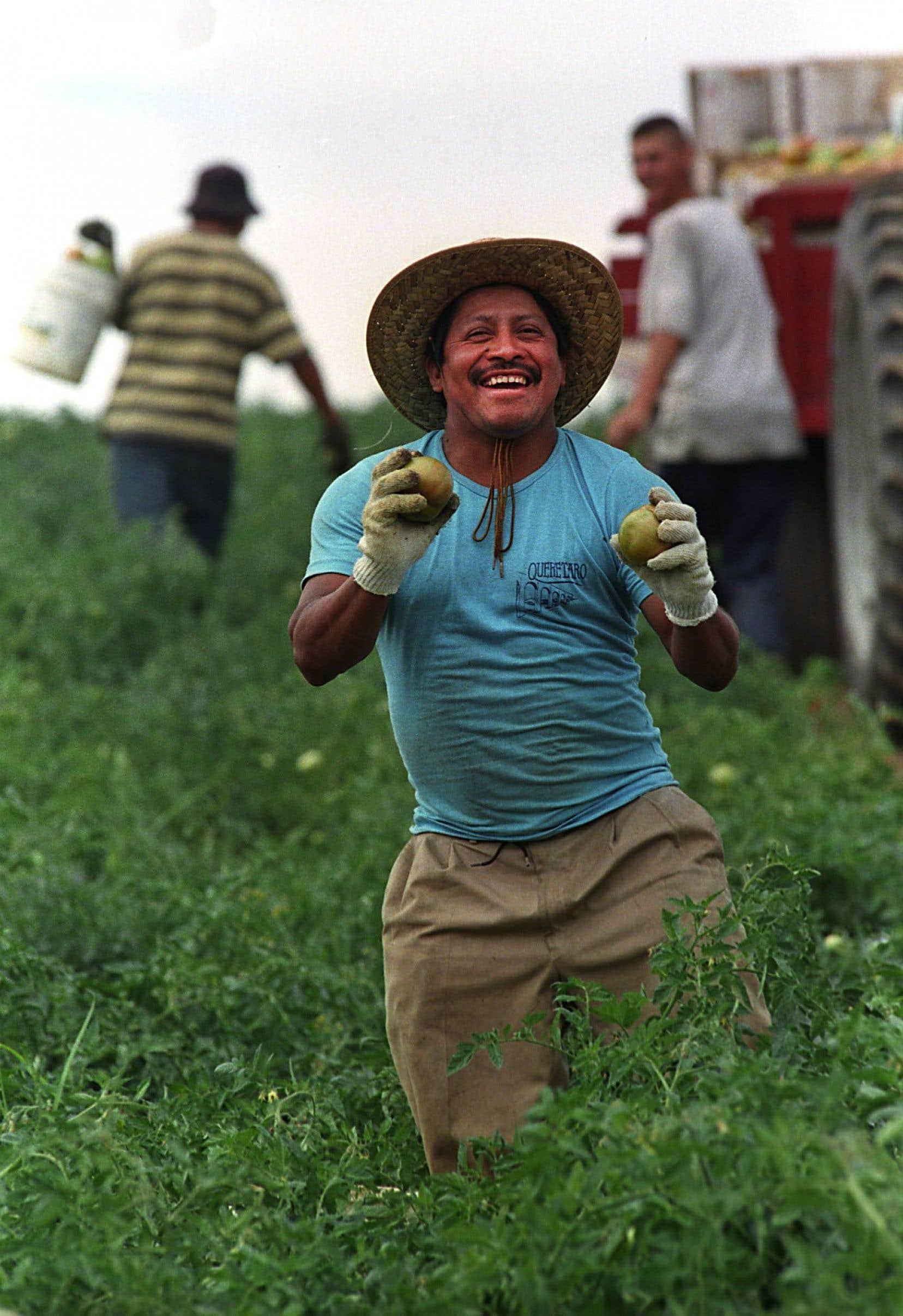 Chaque été, des hommes et des femmes venus du Mexique, du Guatemala, du Honduras ou des Antilles participent aux récoltes chez les agriculteurs québécois, des emplois que la main-d'œuvre locale boude.