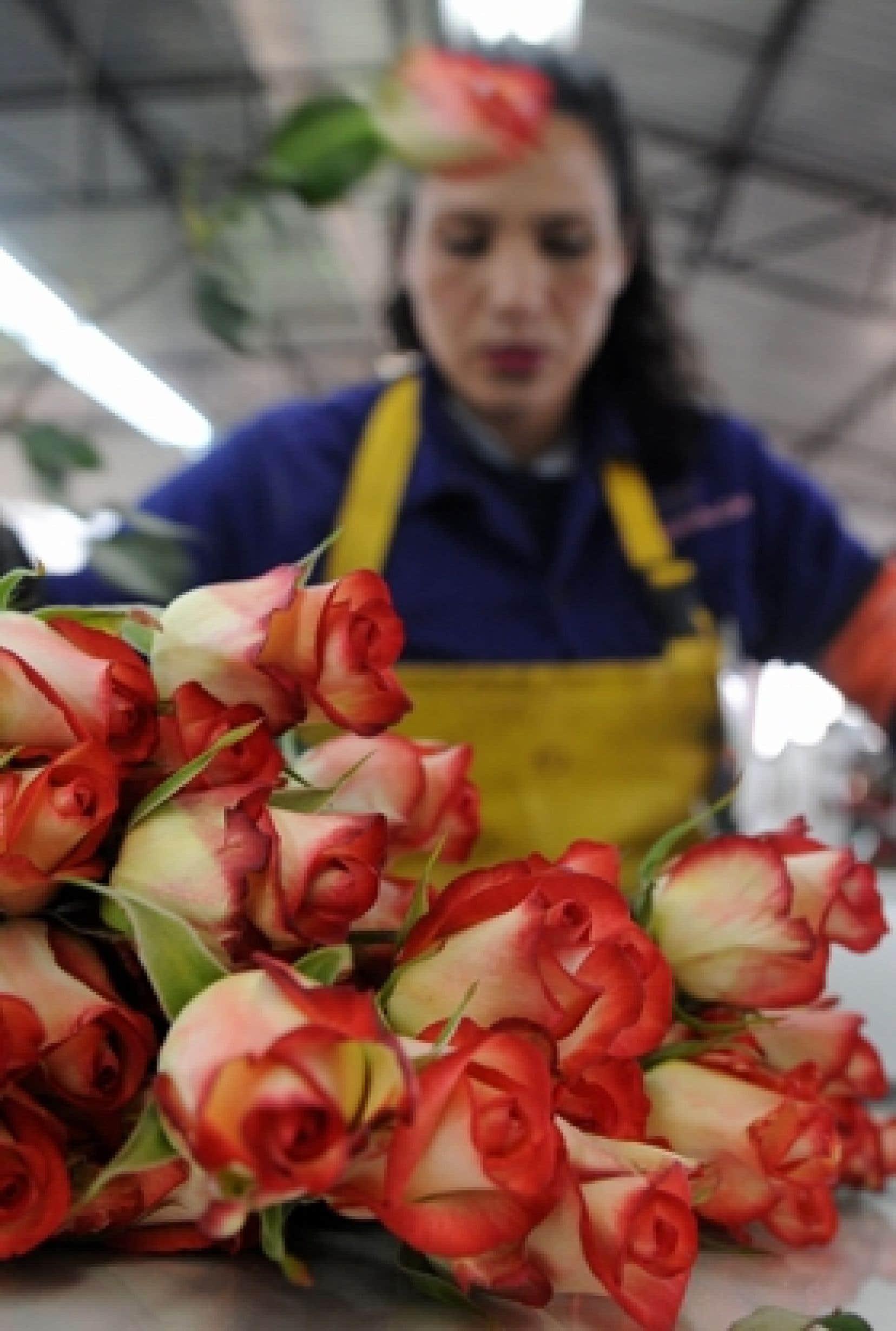 Combien De Rose Pour La St Valentin un bouquet épineux   le devoir