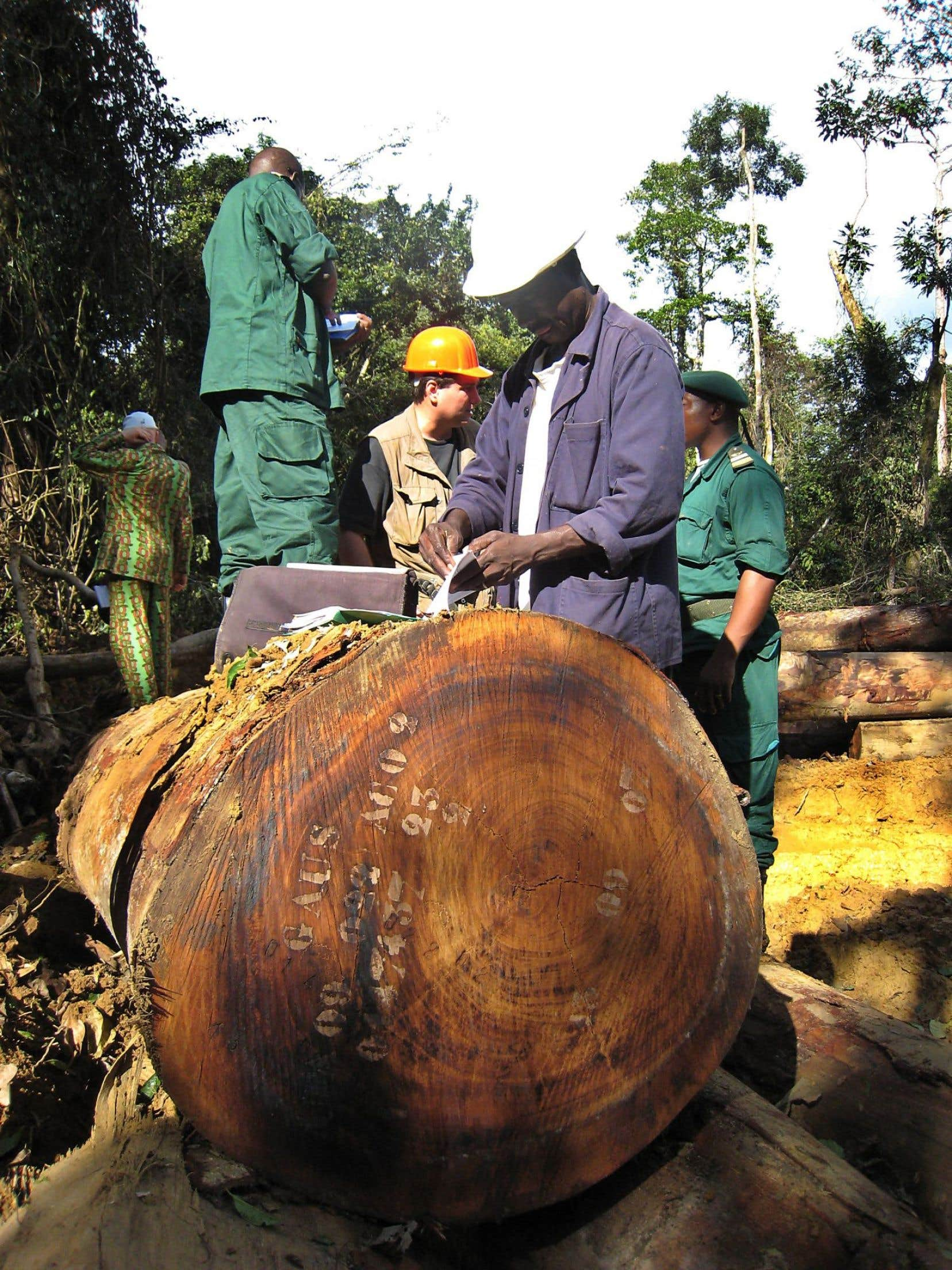 Des travailleurs forestiers dans une forêt camerounaise, à la frontière du Gabon