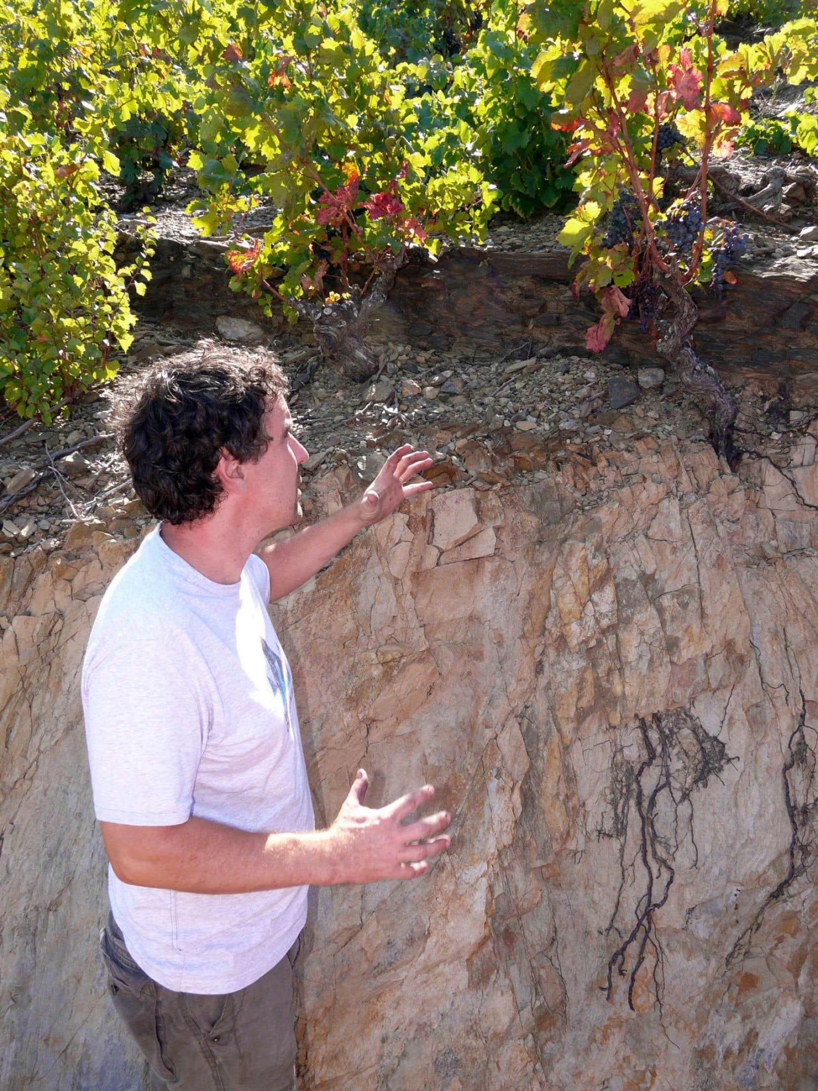 Philippe Gard, au Domaine Coume del Mas, devant ses vieux grenaches plantés sur schistes