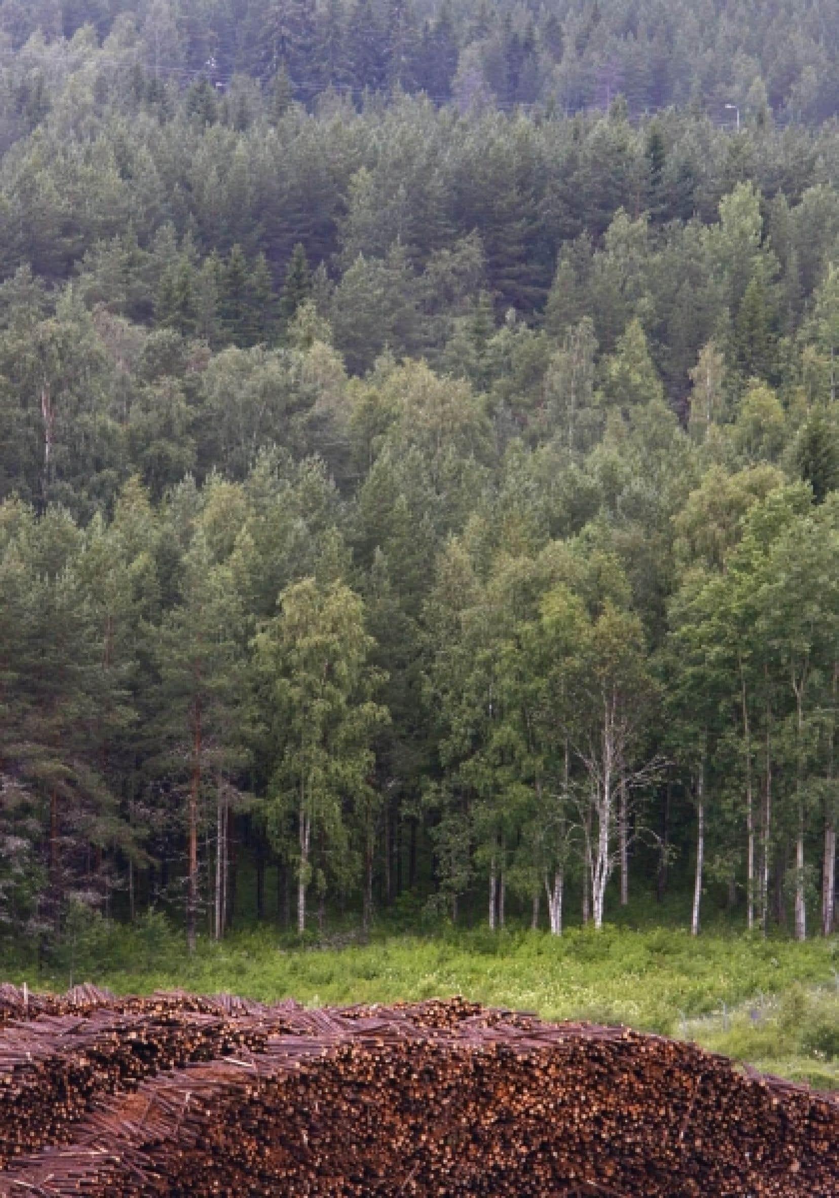Au Québec, on n'intègre pas encore aux plans de coupe forestière les calculs qui optimiseraient la rétention d'eau afin de prévenir les pénuries estivales.<br />