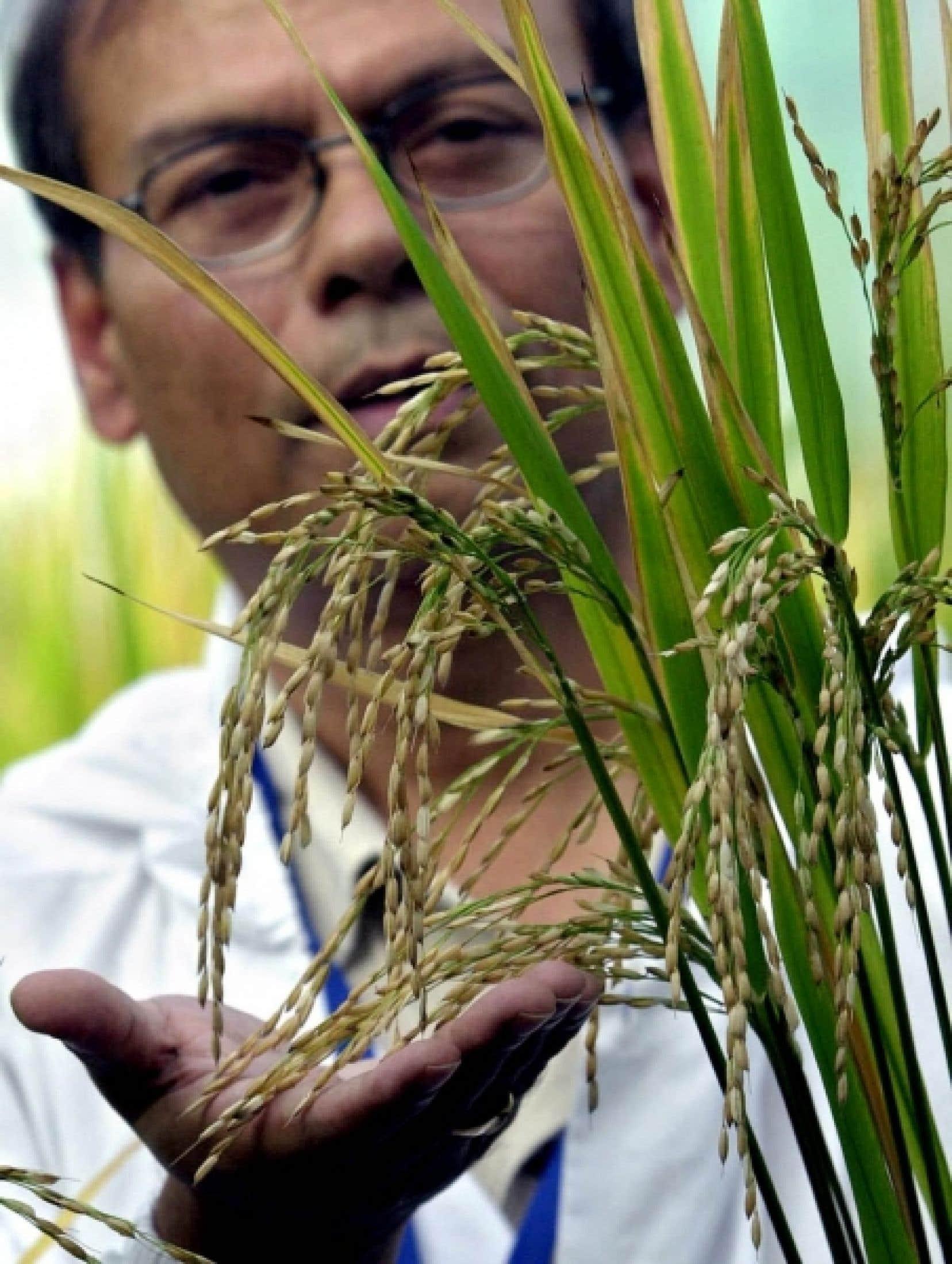 Le nouveau «protocole de Nagoya-Kuala Lumpur» définit un régime de responsabilité pour les producteurs d'OGM et de répartition des dommages à l'environnement.<br />